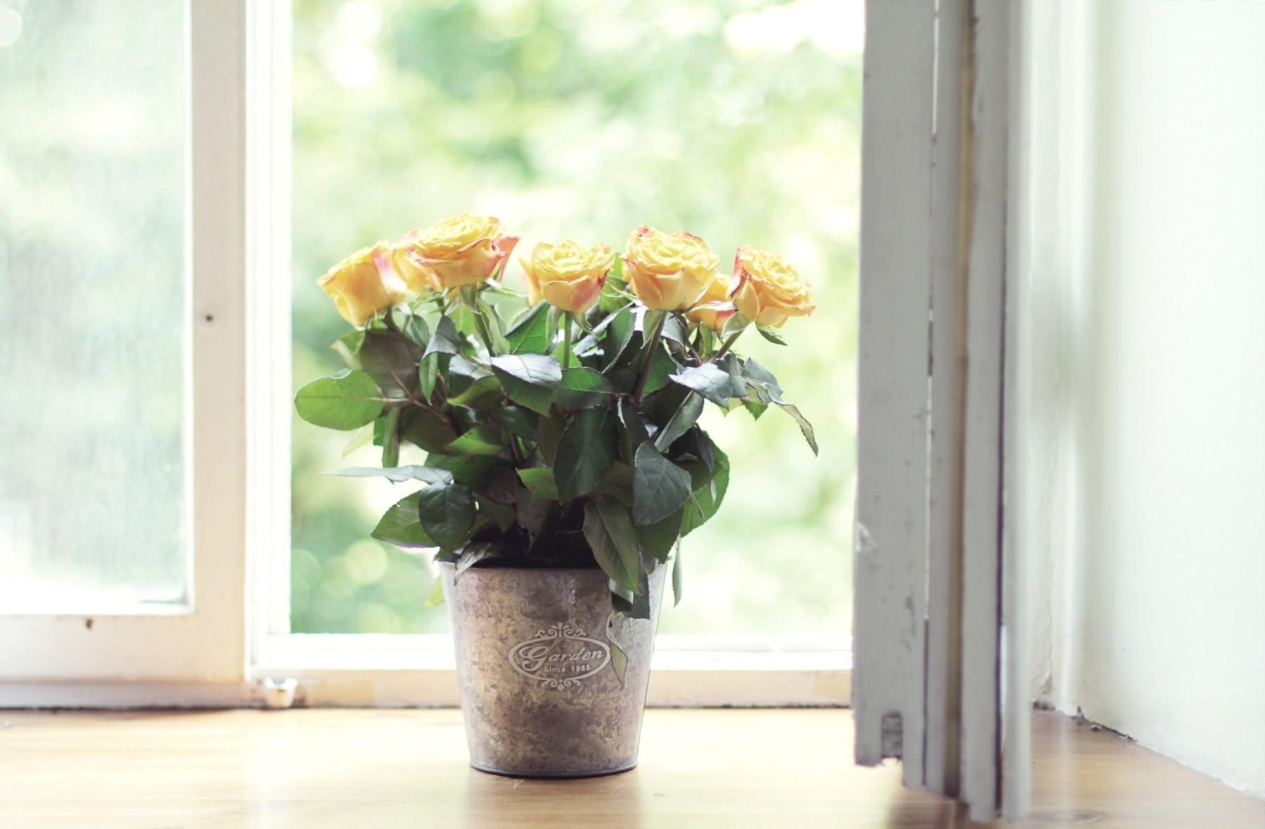 Подарить цветы с окнах, ромашек