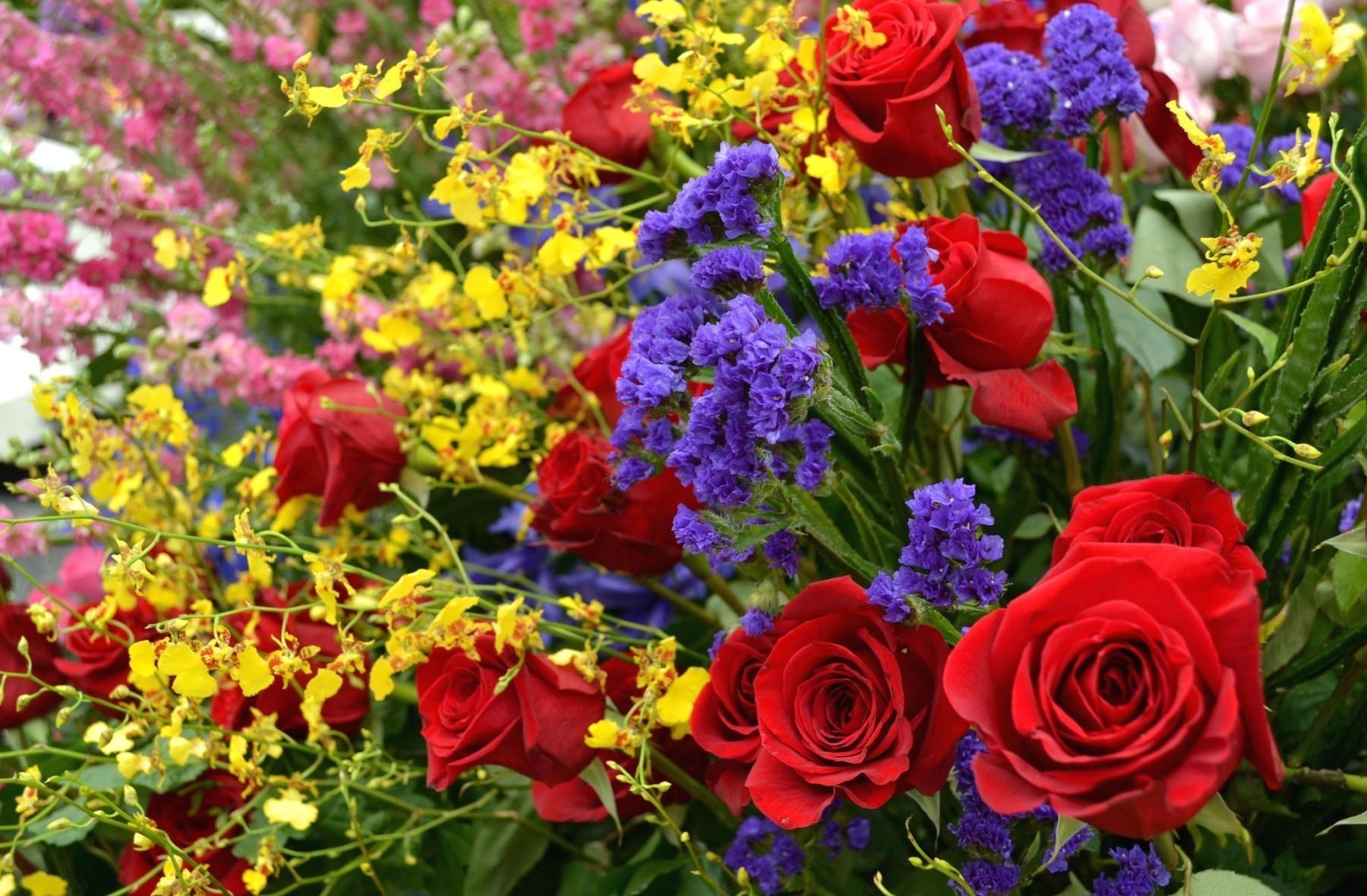 вам необходим картинки цветов фотографии цветов задаются вопросом