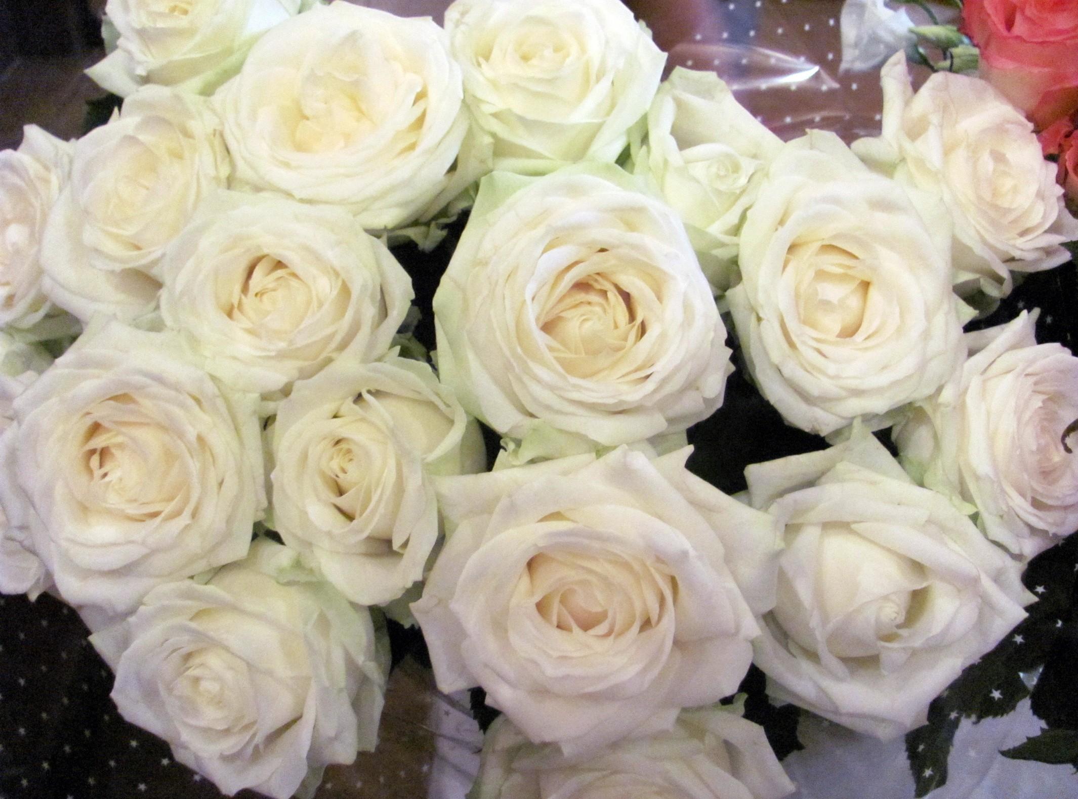 mawar bunga bunga putih bunga pengemasan