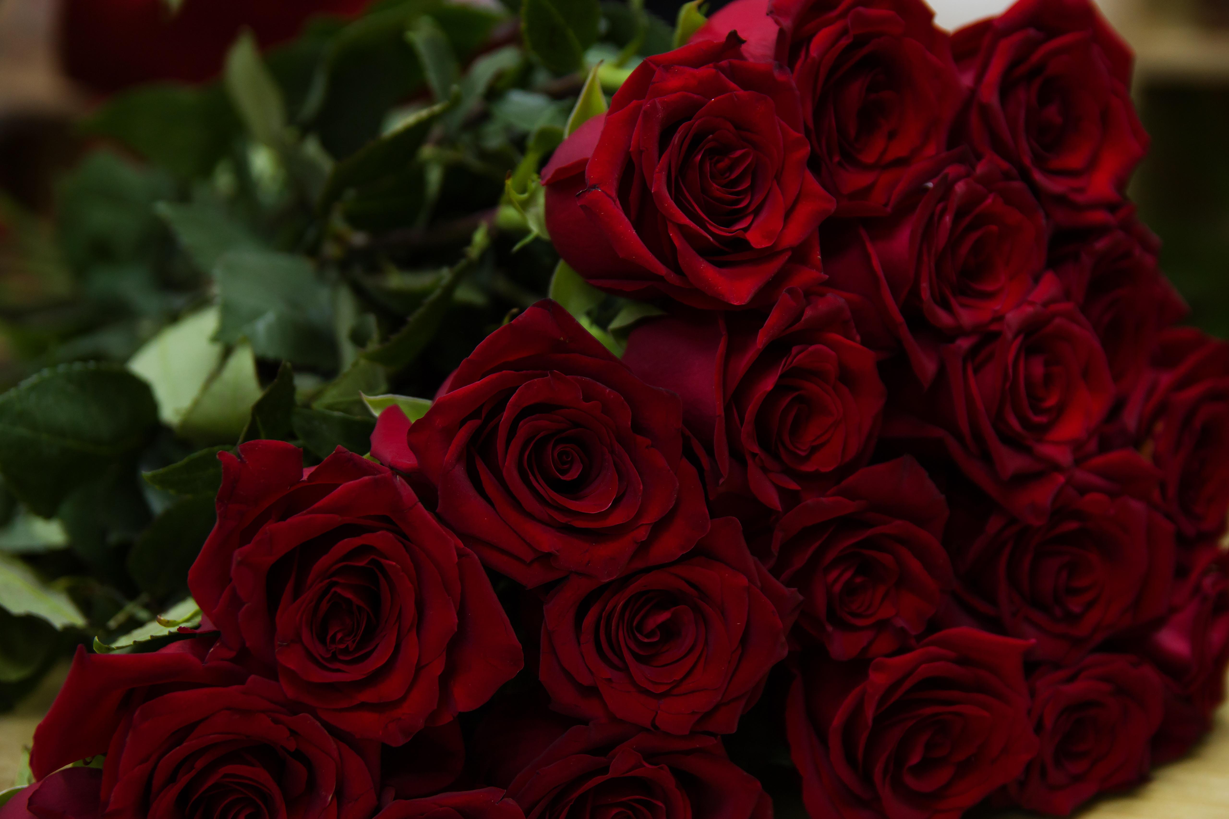 Fond D Ecran Des Roses Rouge Bouquet Fleurs 5120x3413 Wallup