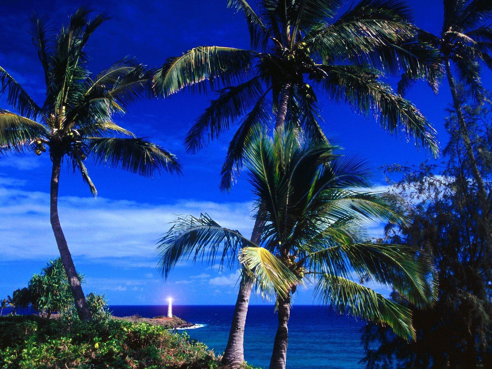 отбасы?ызды? фотографии на рабочий экран пальмы фрезы