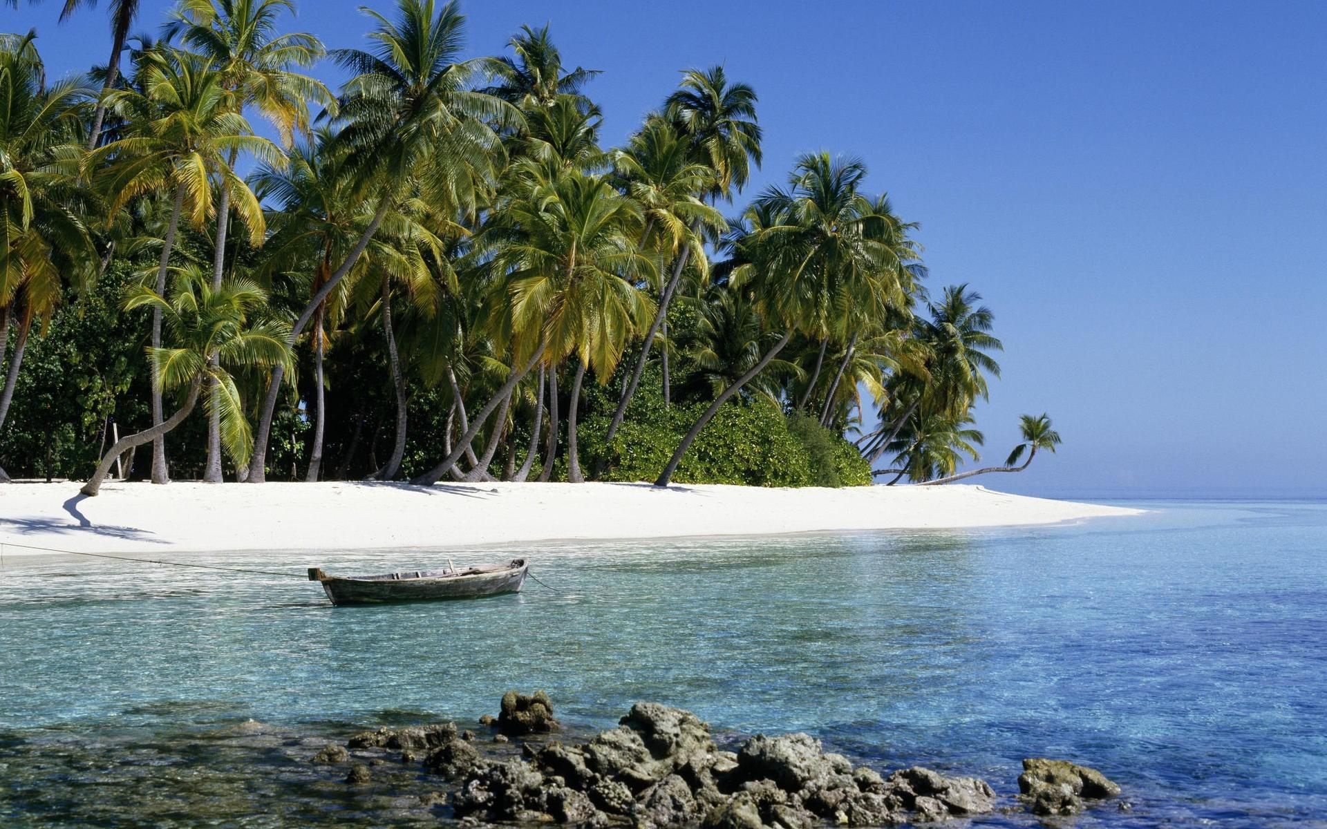 животным картинки острова в океане на рабочий стол смелые
