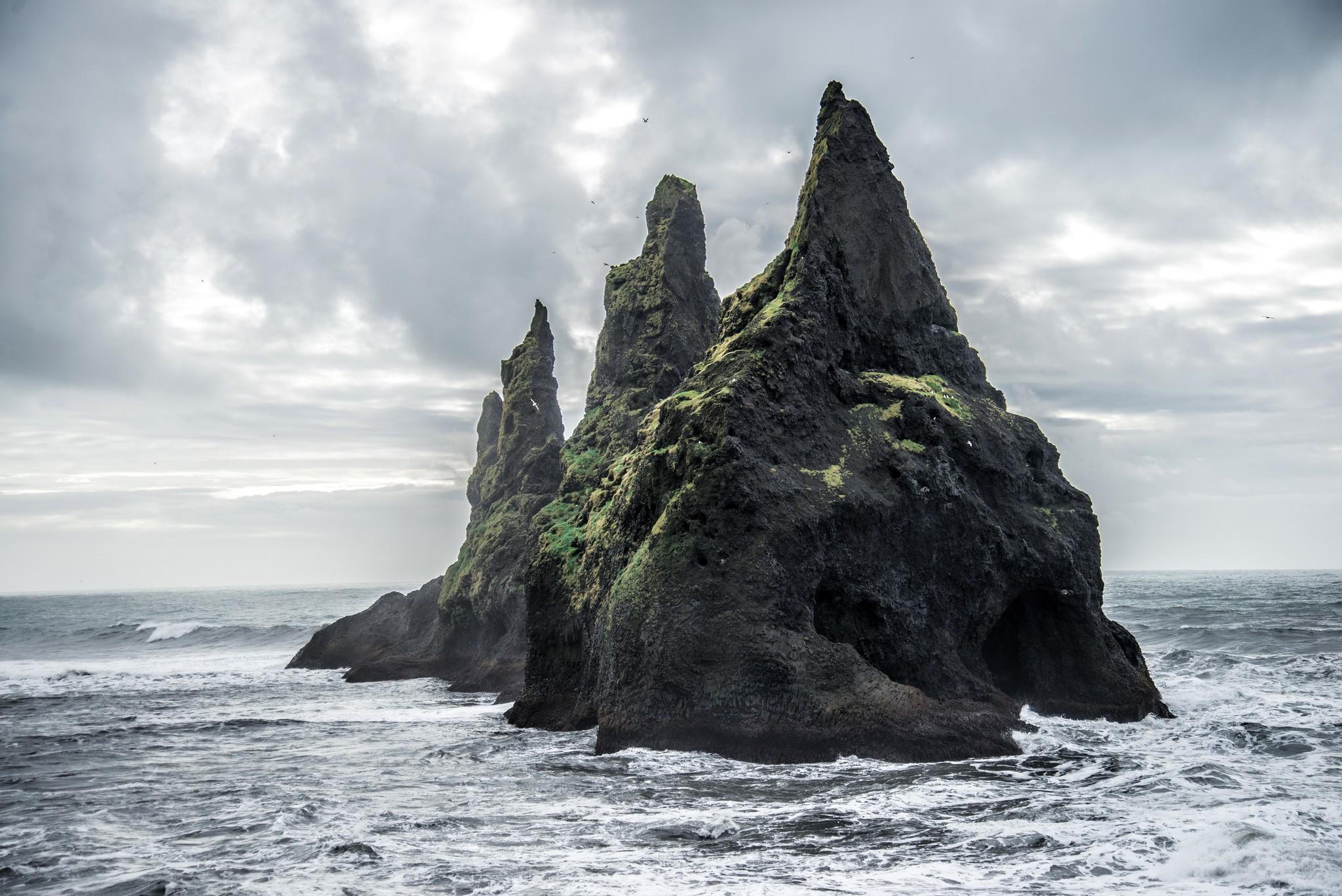 огромные фотографии берег виды растений лечат