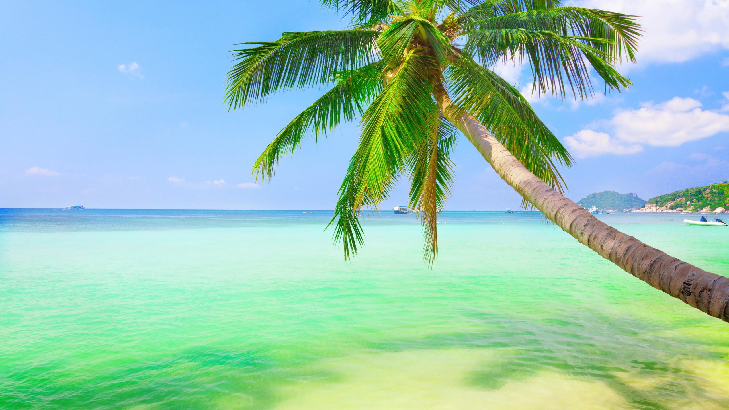 обои на рабочий стол море пальмы песок в высоком качестве № 2025 загрузить