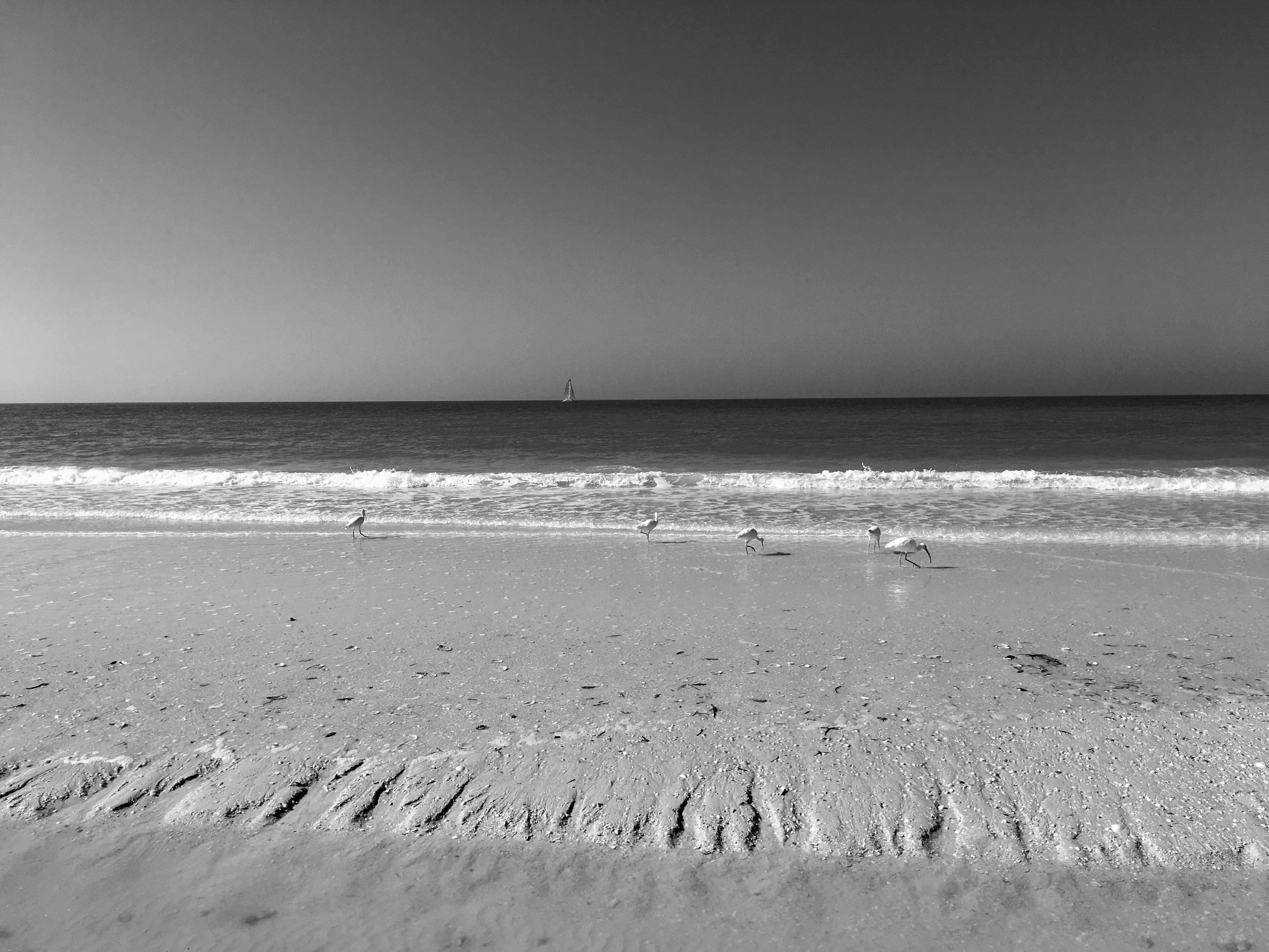 Sfondi Mare Bianco E Nero Corpo Dacqua Puntellare Spiaggia