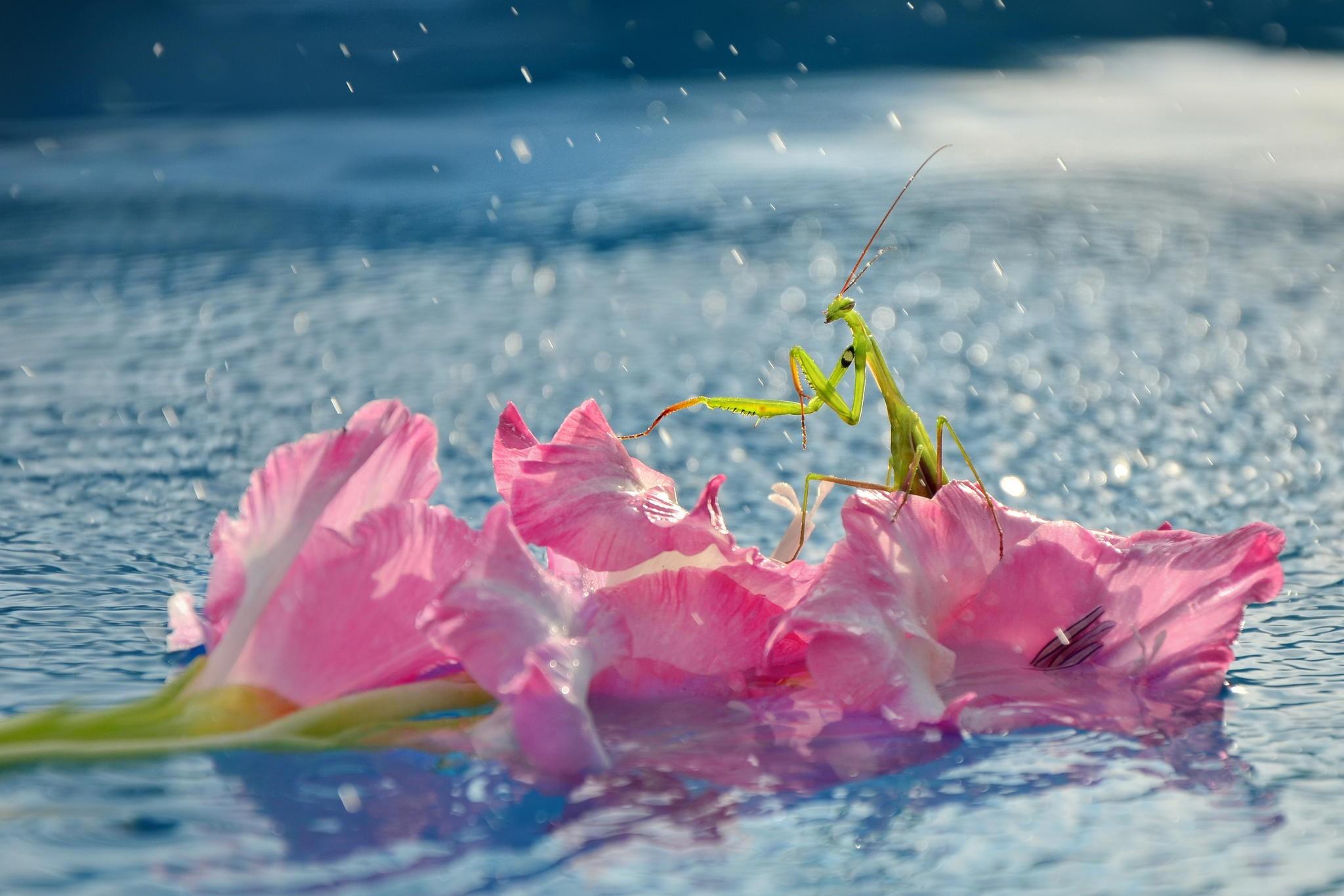 картинки нежность воды поэтапно