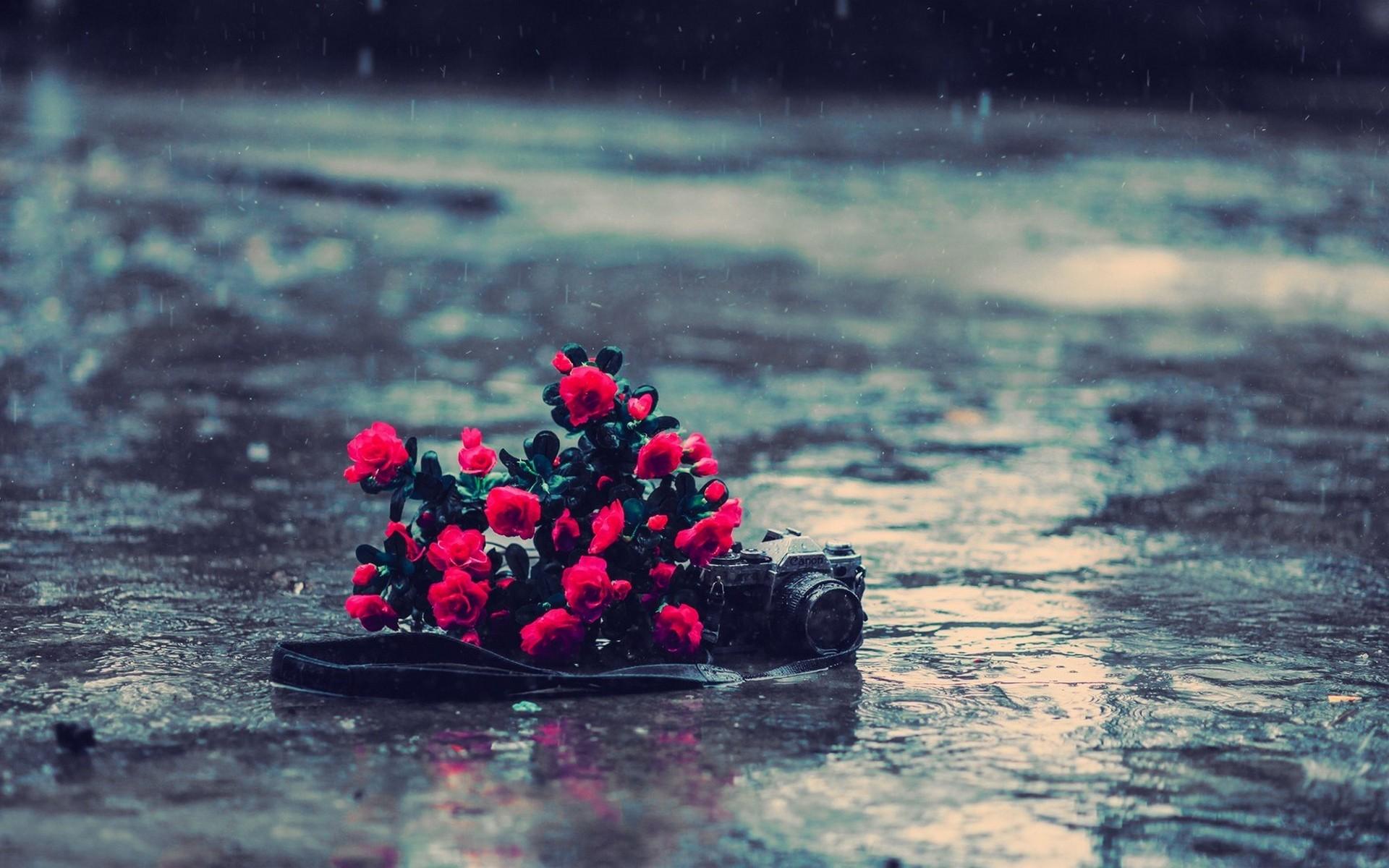 было такого грустные цветы фото или ашкелонский