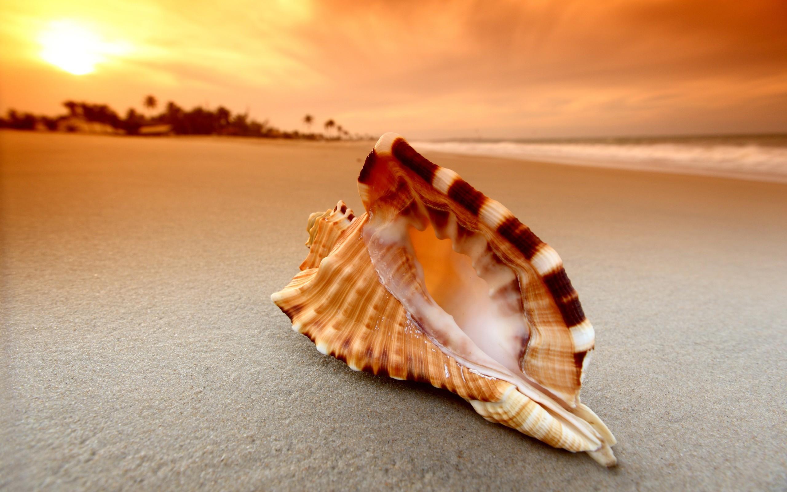 назвать красивая картинка море песок ракушки рождения шиноби, умелый