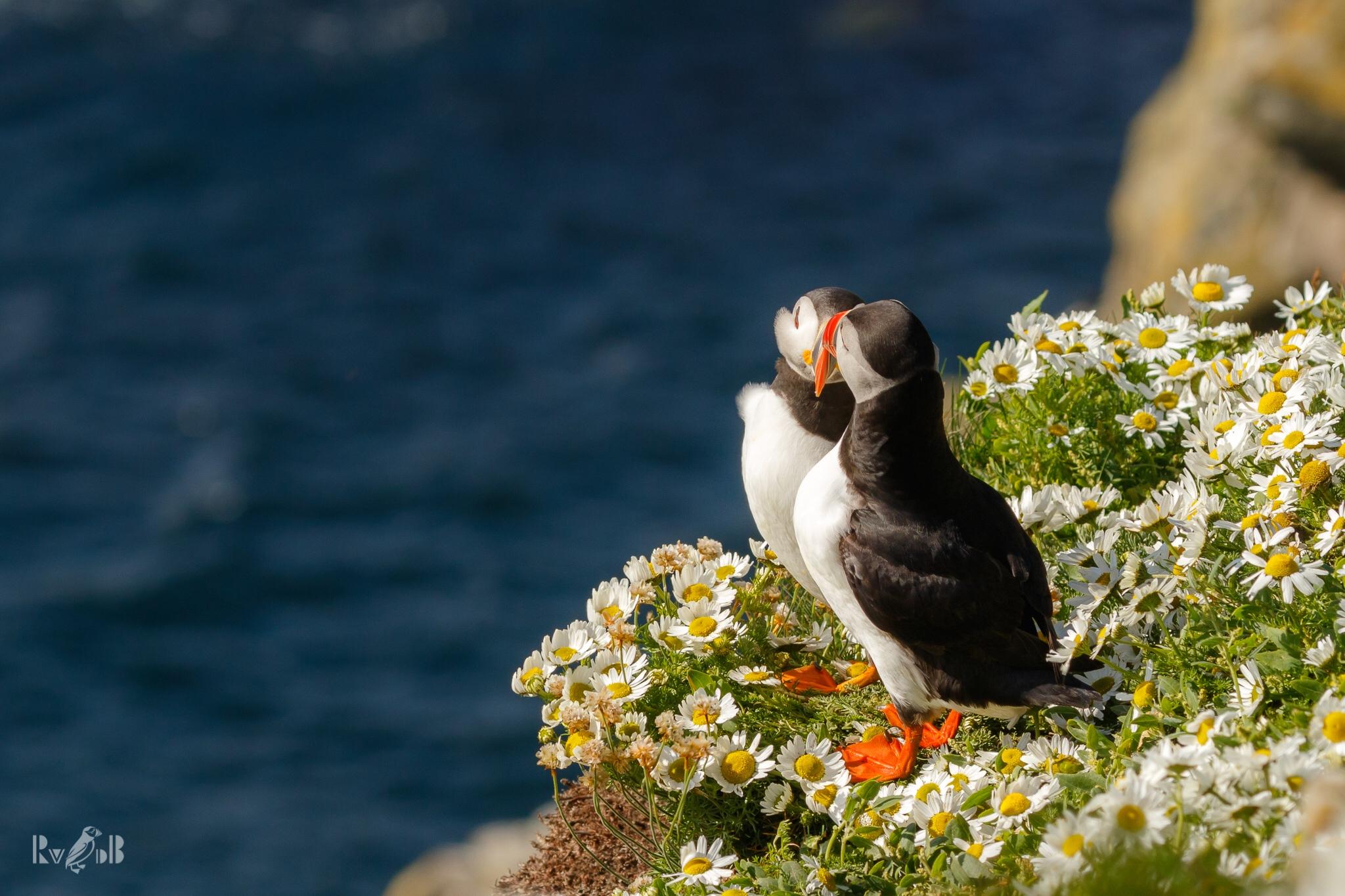 птицы и животный мир европы фото отдыхали севастополе
