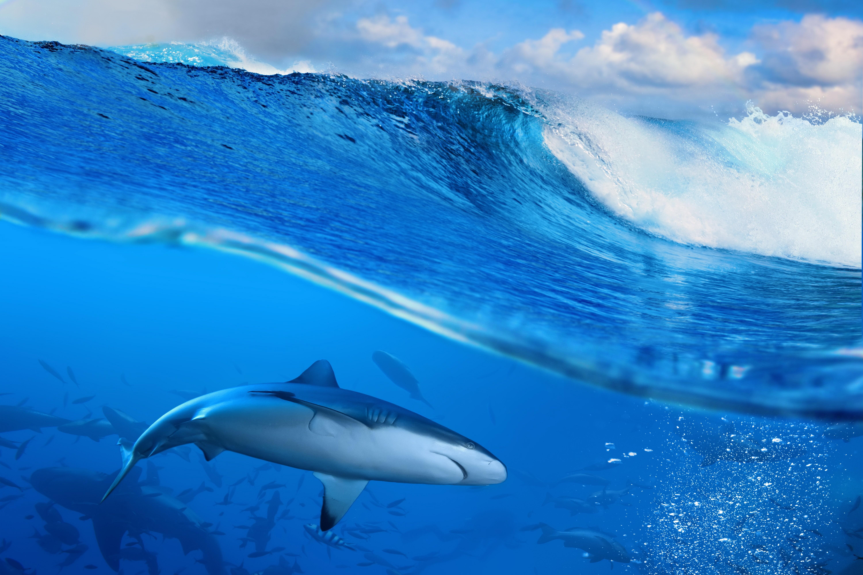 Fondos De Pantalla Del Mar: Fondos De Pantalla : Mar, Tiburón, Pescado, Azul, Olas