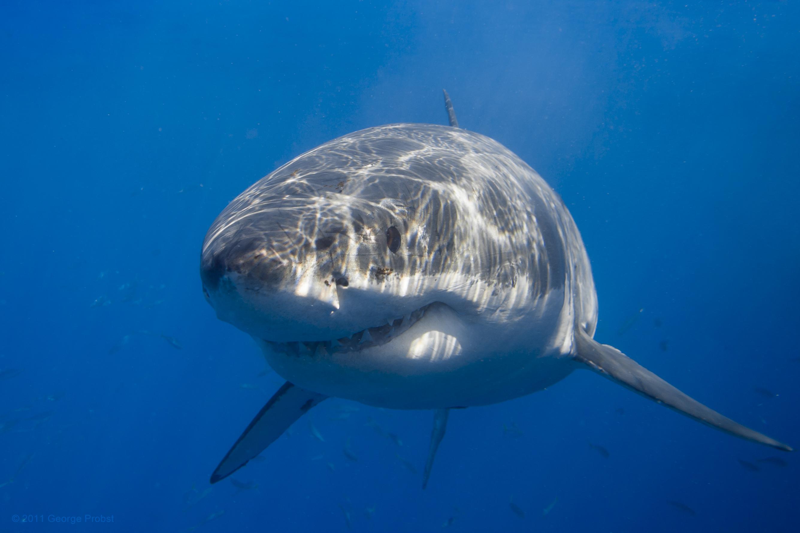 Fond d 39 cran mer eau poisson faune sous marin - Grand poisson de mer ...