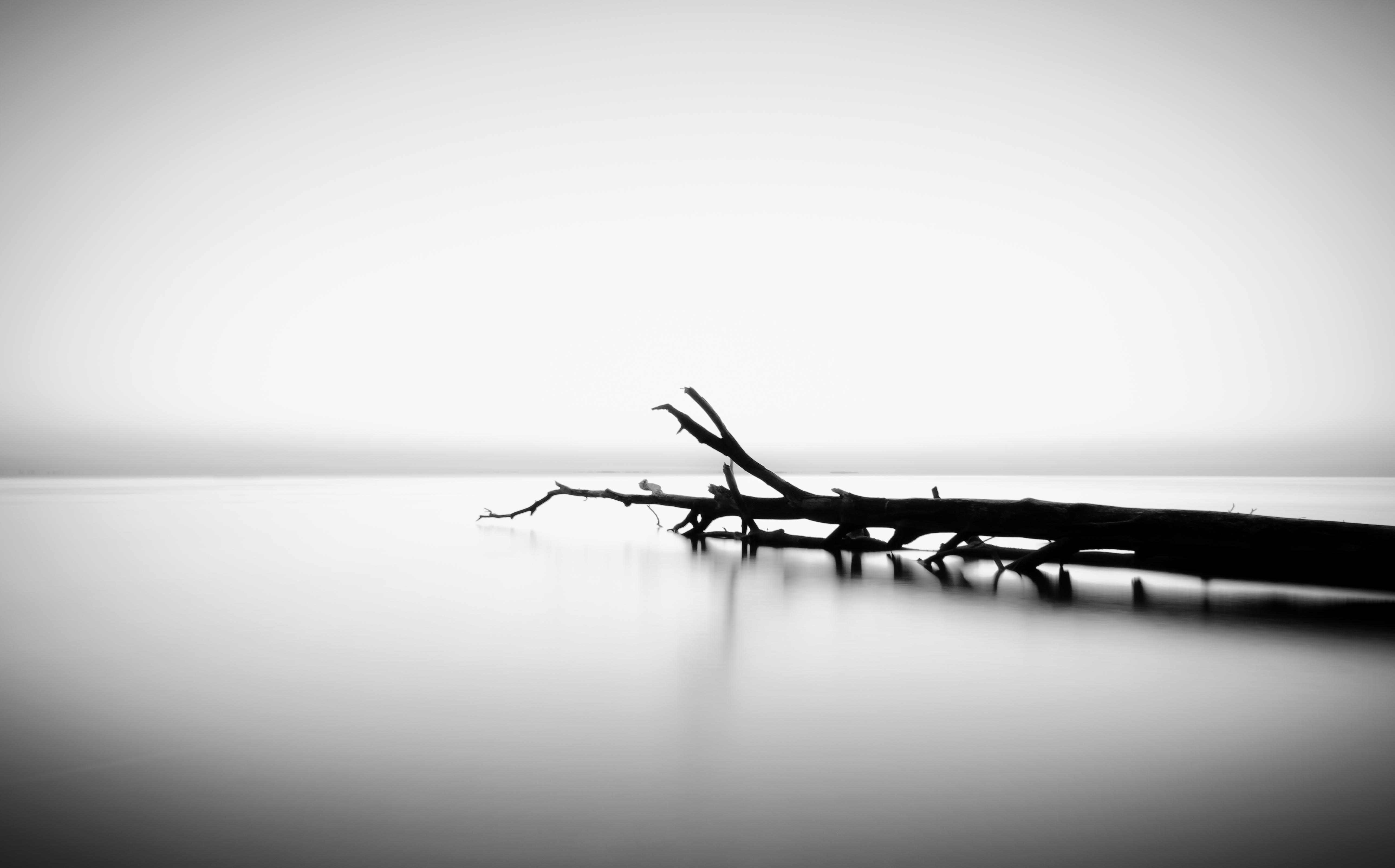 Pace Bianco E Nero sfondi : mare, cielo, bianco e nero, albero, acqua, alba