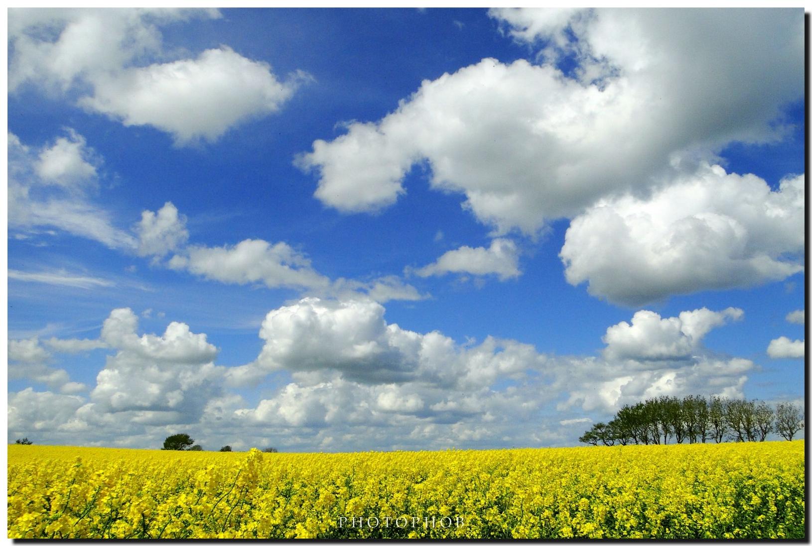 Fondo Primavera: Fondos De Pantalla : Mar, Cielo, Primavera, Rural