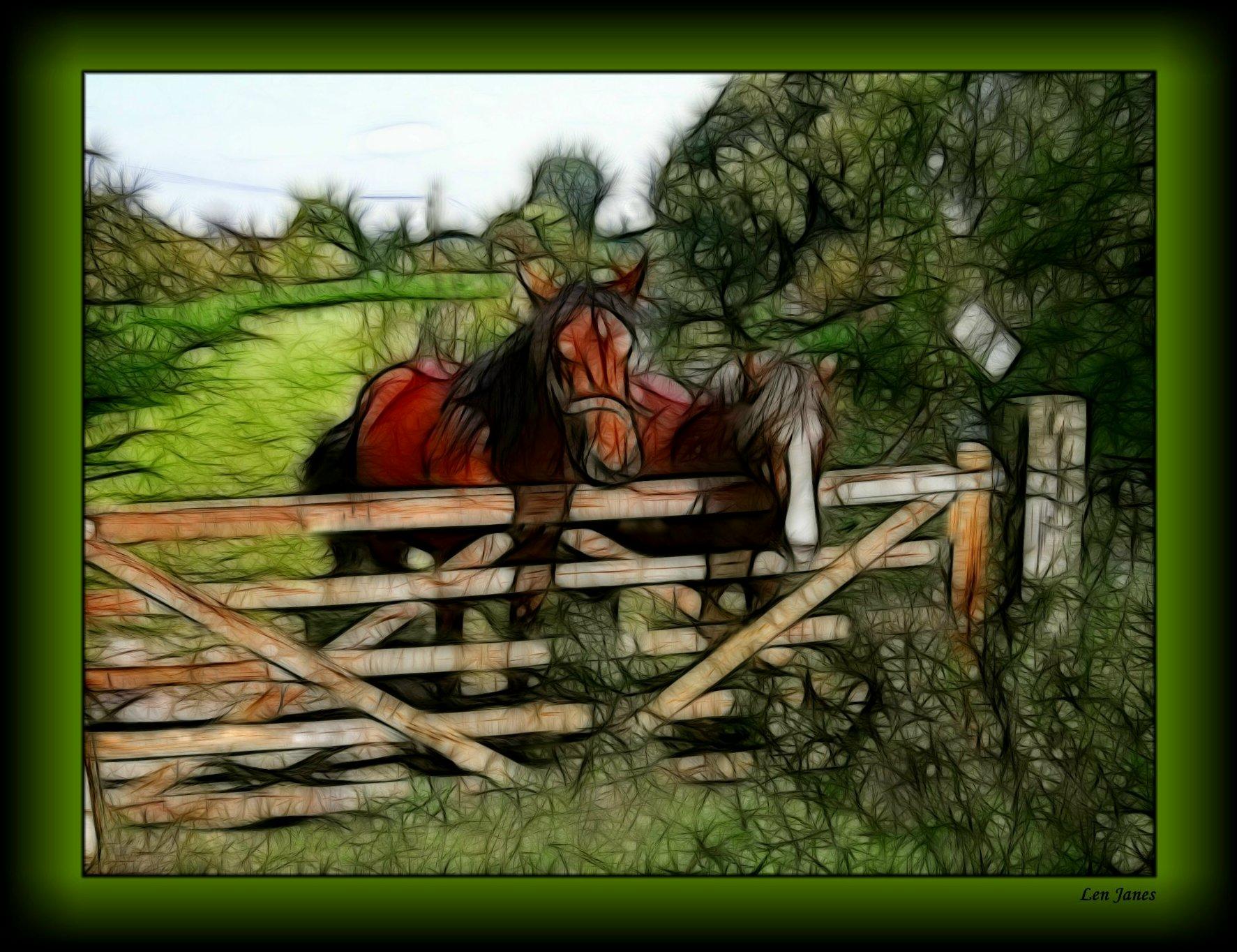 hintergrundbilder meer wasser natur rot pferd winter feld haus gr n br cke braun. Black Bedroom Furniture Sets. Home Design Ideas