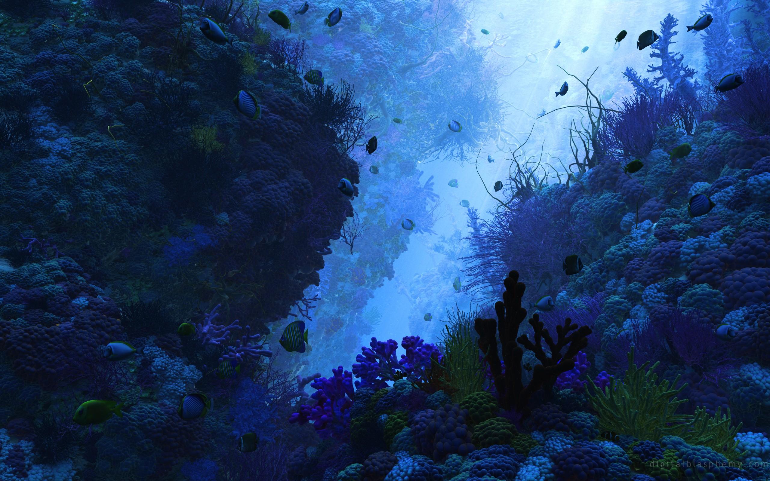 картинки под водой высокого качества что