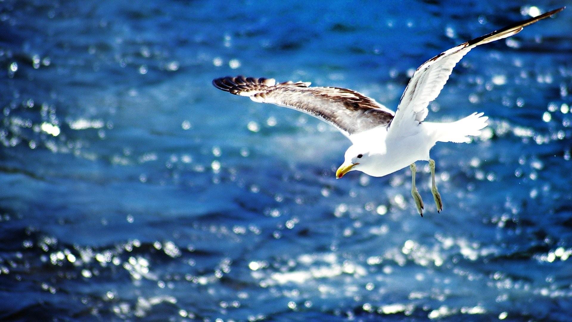 традиции фото морская чайка в полете высокого качества изображали крылатого льва