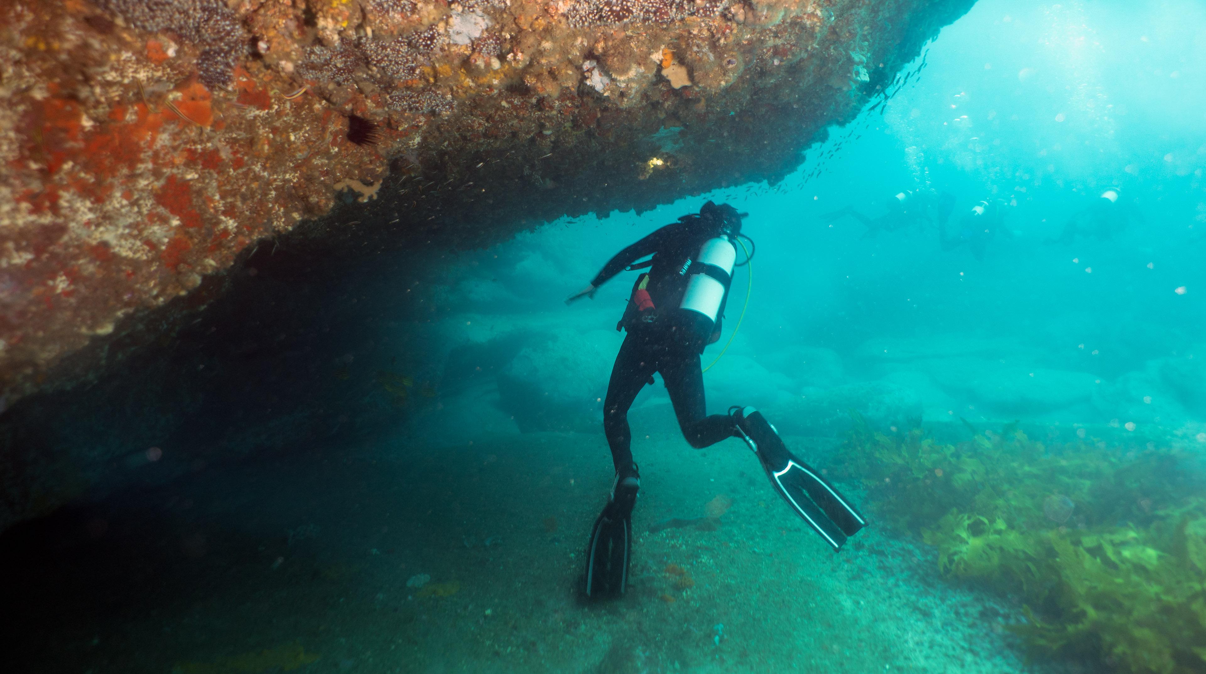 Sea Water Underwater Snorkeling Diving Scuba Ocean Freediving Marine Biology Organism Equipment