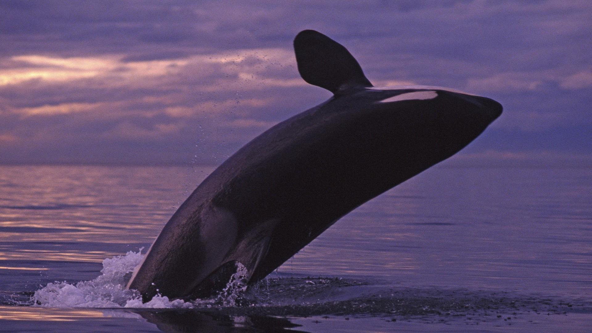 Картинки моря и китов