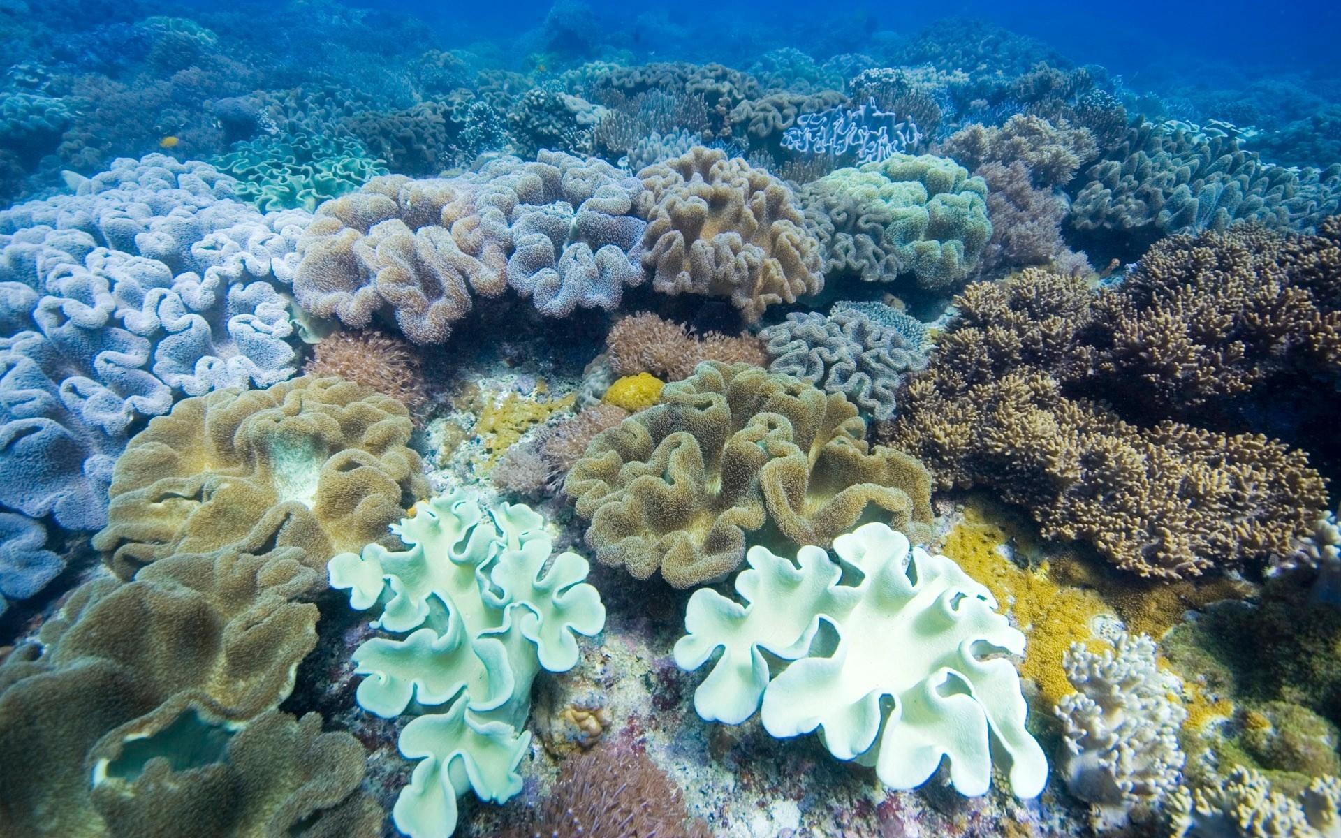 Wallpaper  seaweed, underwater, multi colored, surface 20x20 ...