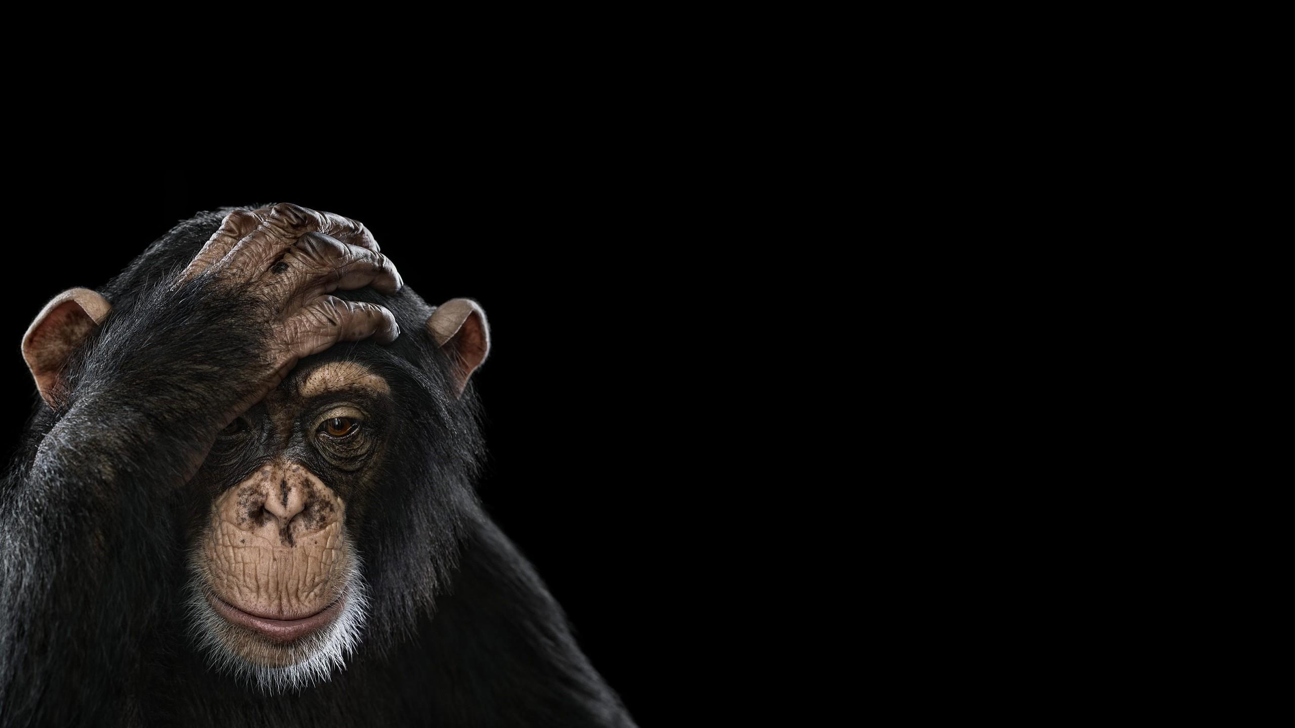 прикольные обезьяны картинки на рабочий стол на весь экран бондаревский