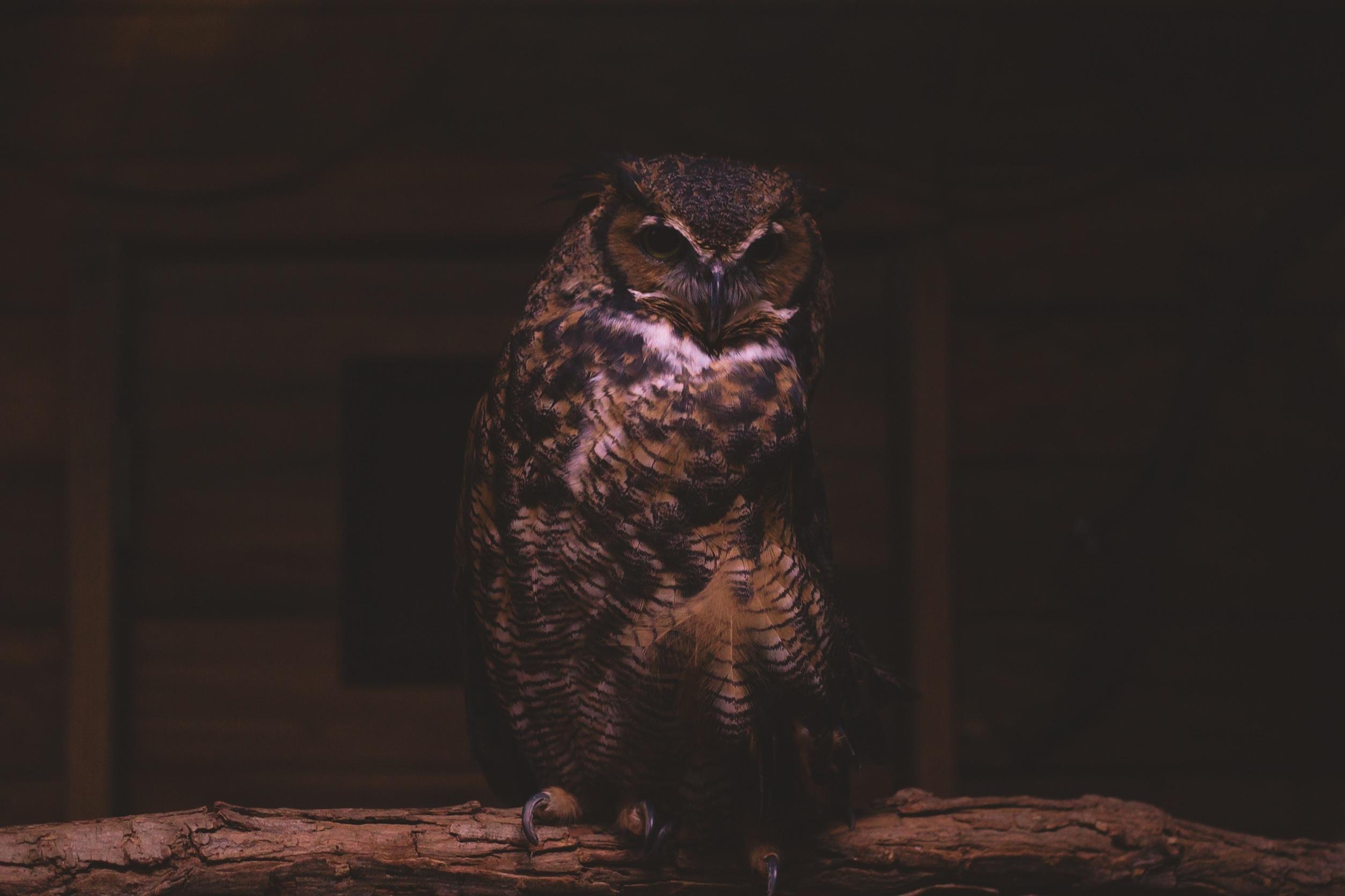 Совенок в темноте фото