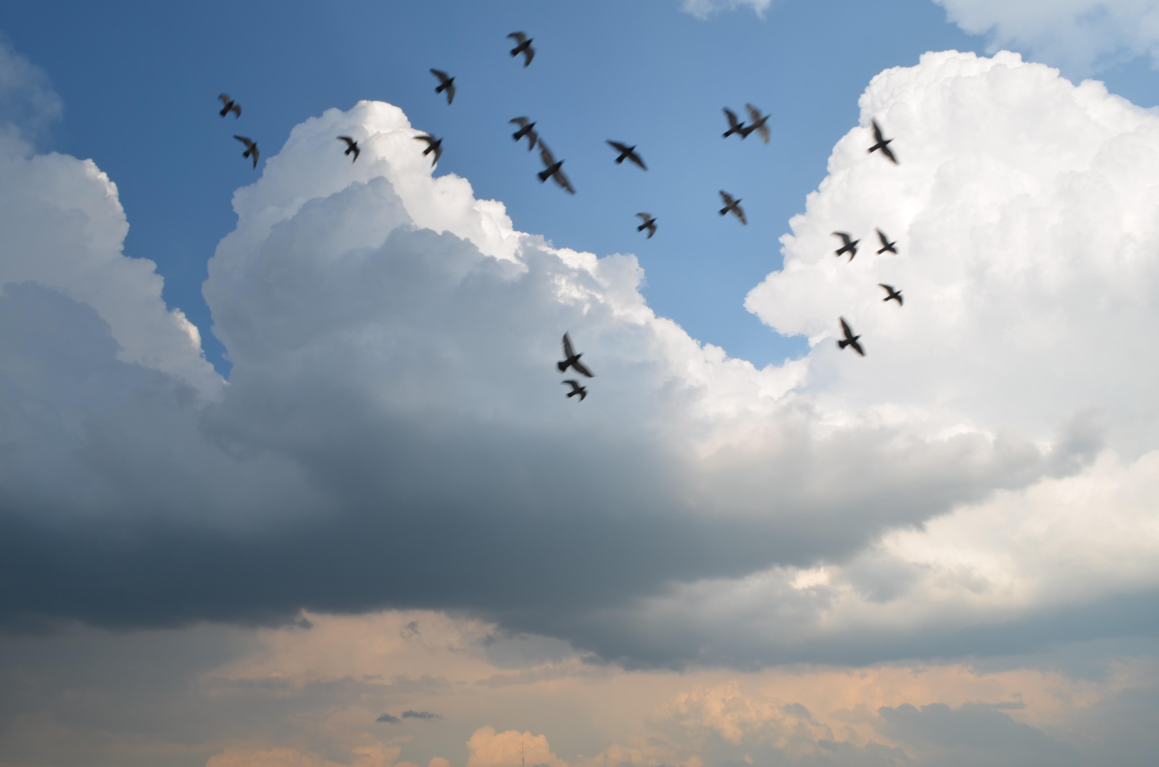 угол фото небо птицы облака заводят