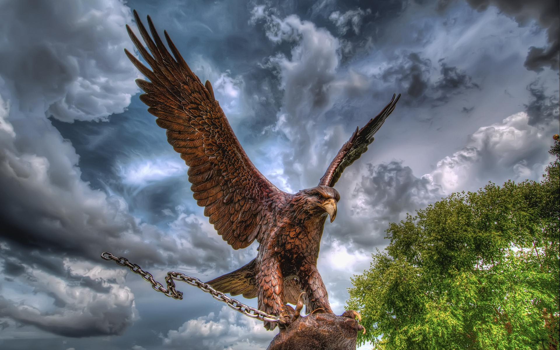 Фото орла на телефон любят