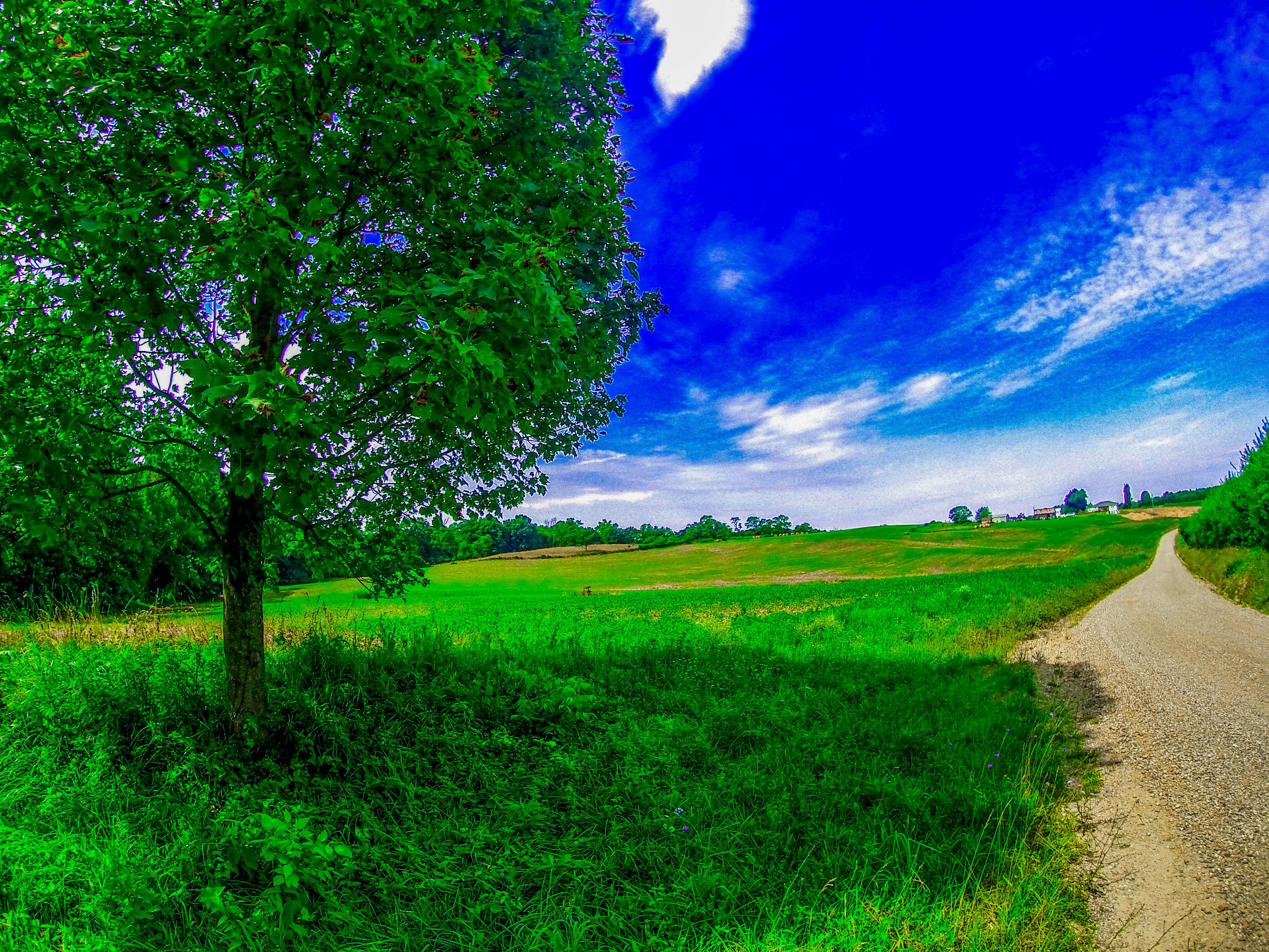 80 Gambar Pemandangan Rumput Hijau Paling Bagus