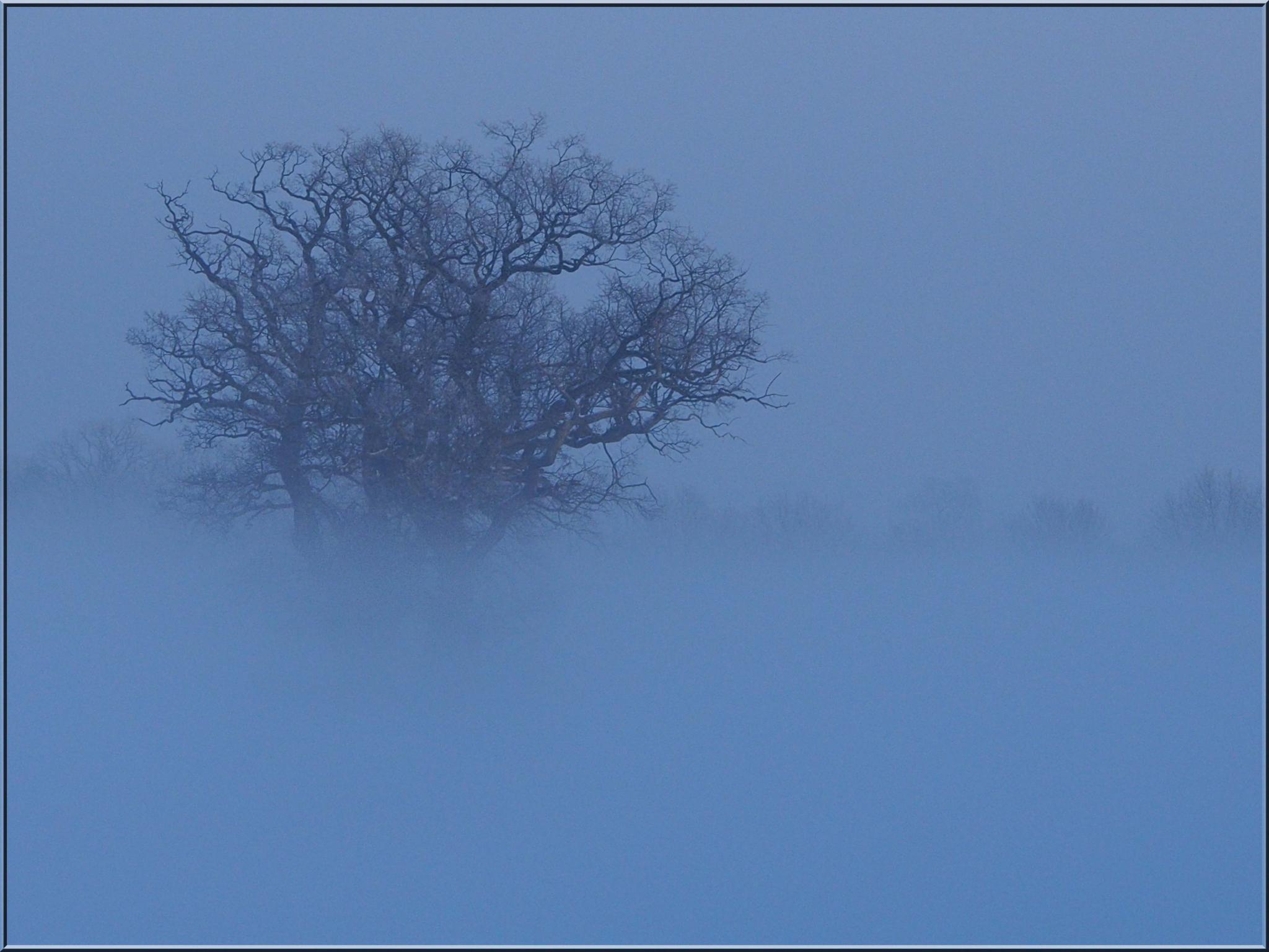 Hintergrundbilder Himmel Schnee Winter Ast Frost Wind