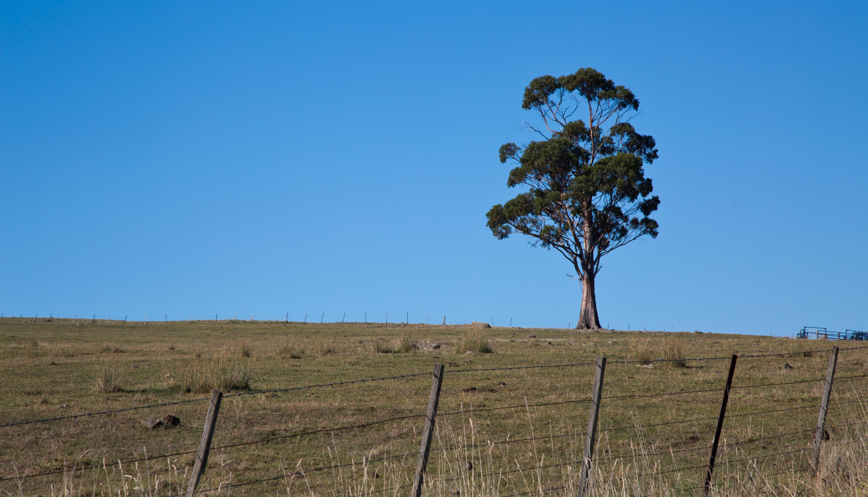 деревья в степи фото и названия развита типу лучших