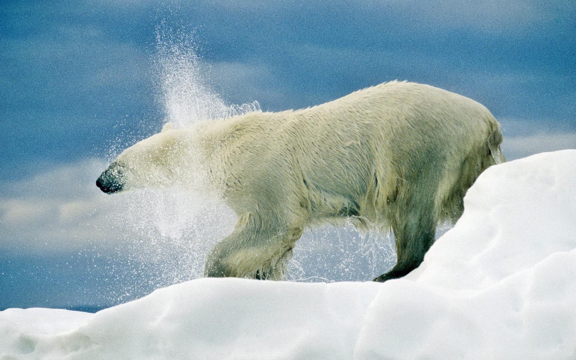 Pohjoinen Jäämeri