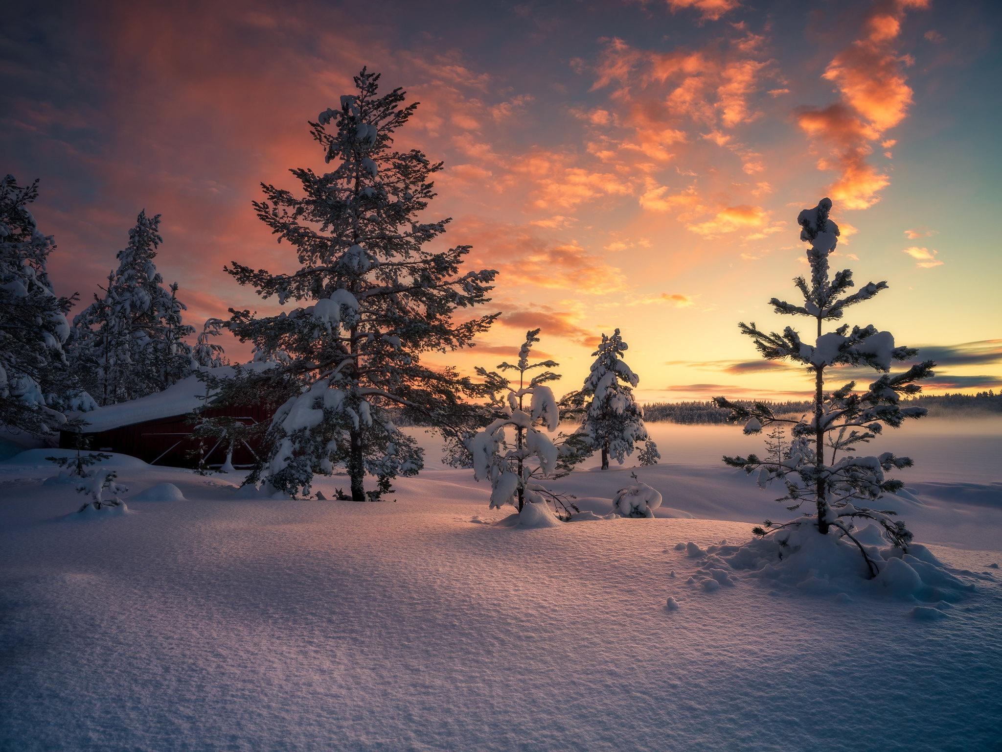 Wallpaper Snow Cold Winter Sky Nature Trees Sunlight