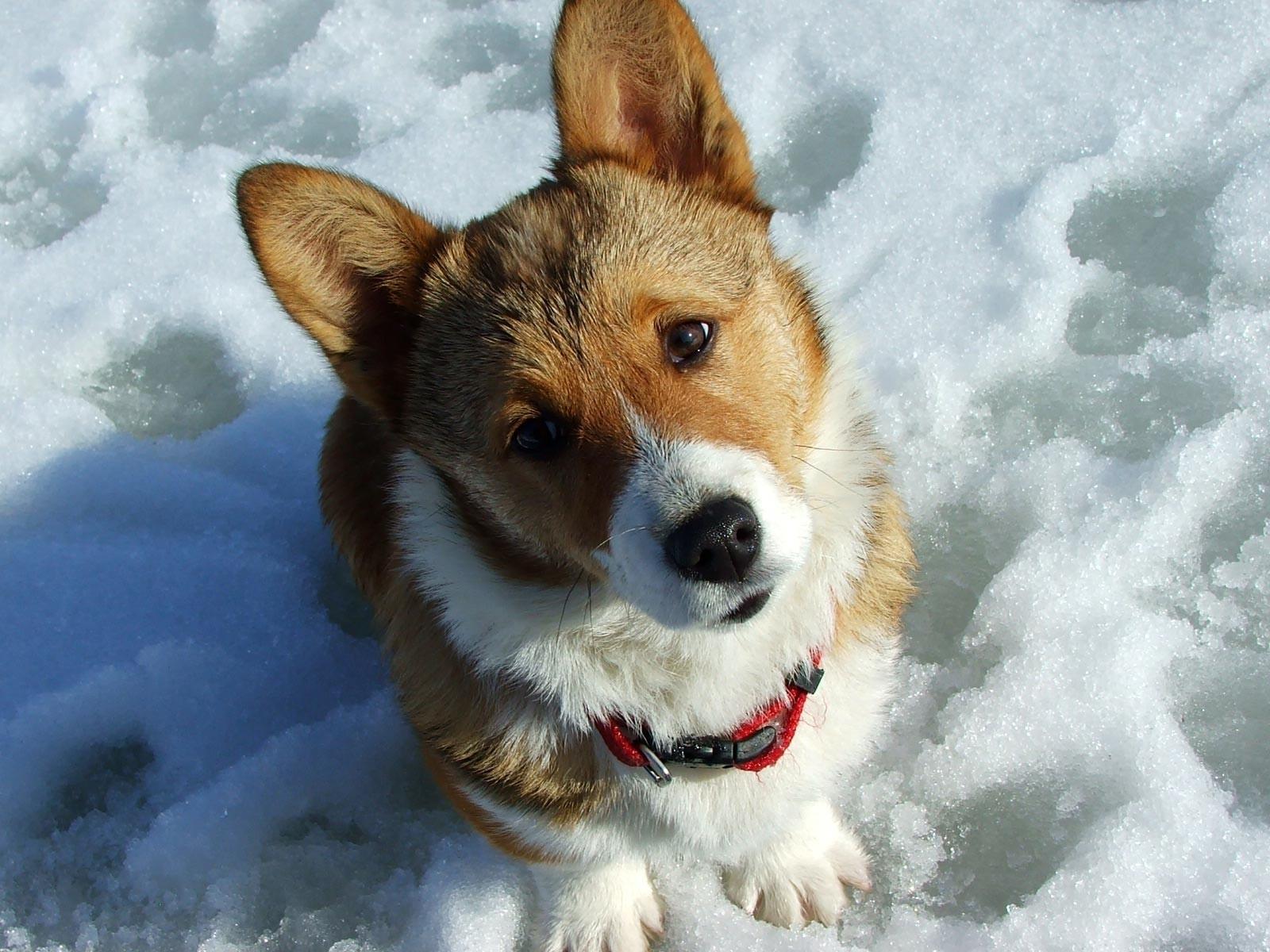 Картинка собака и снег