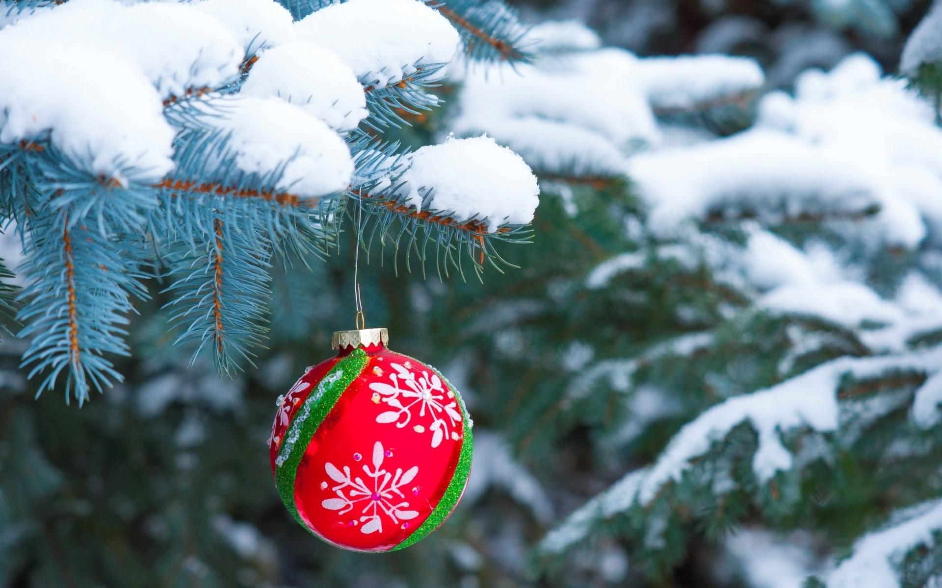 Wallpaper Snow Winter Branch Spruce Christmas Tree
