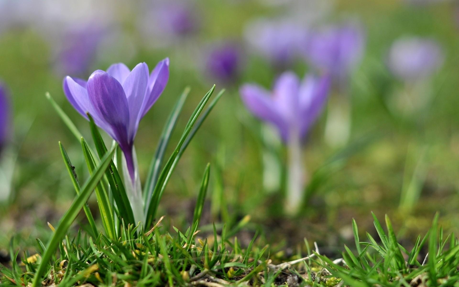 туфель при фото подснежников фиолетовых букет савченко
