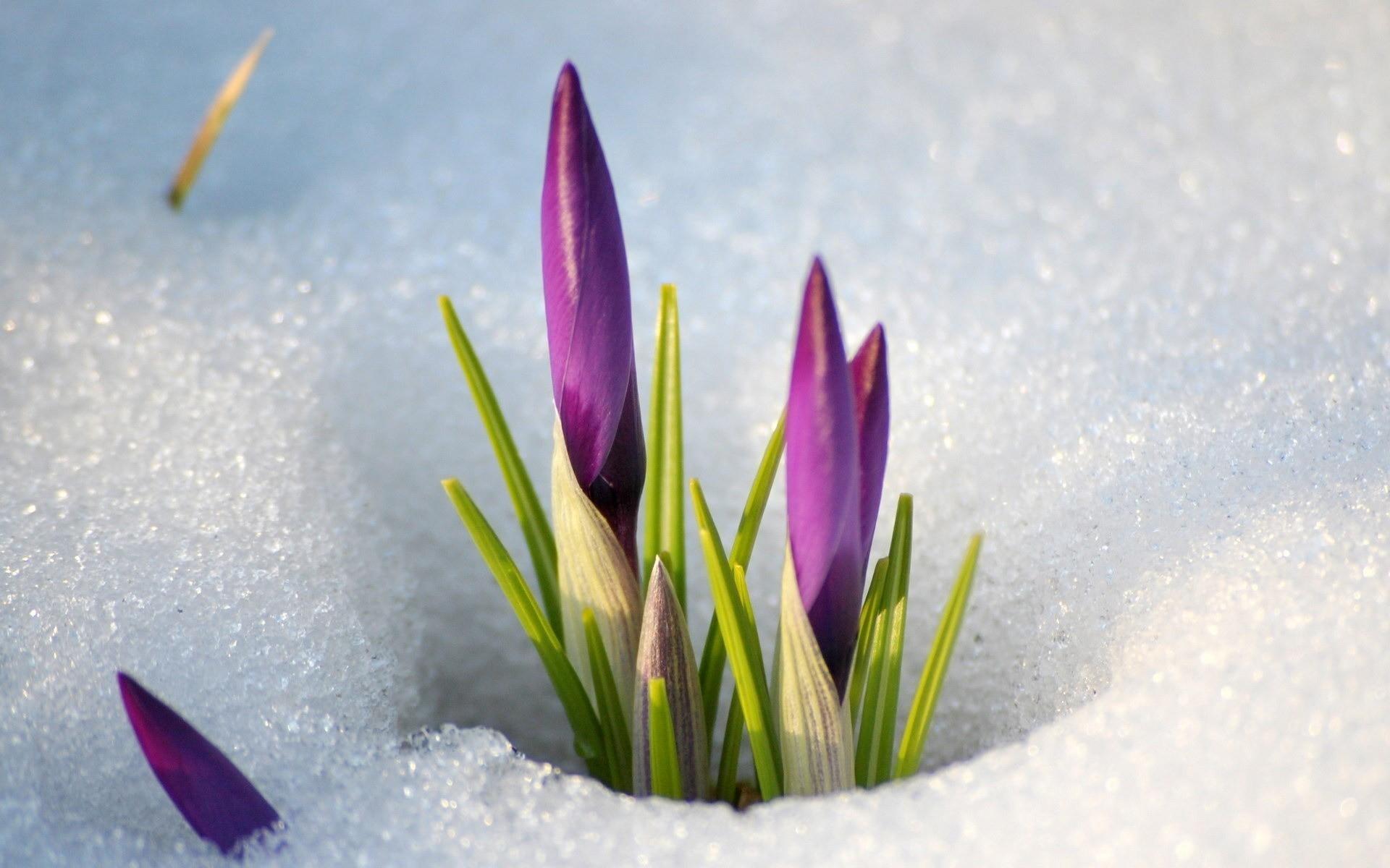 Живые красивые обои на рабочий стол 3d живые ранняя весна