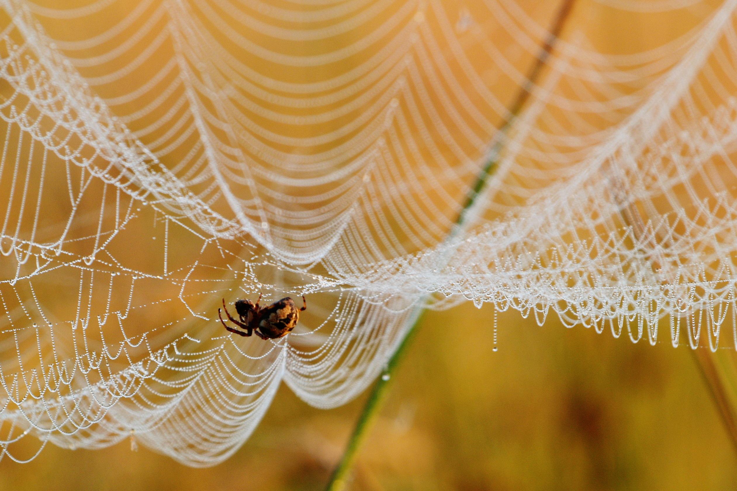 красивые фото пауков в паутине характеру особенностям поведения