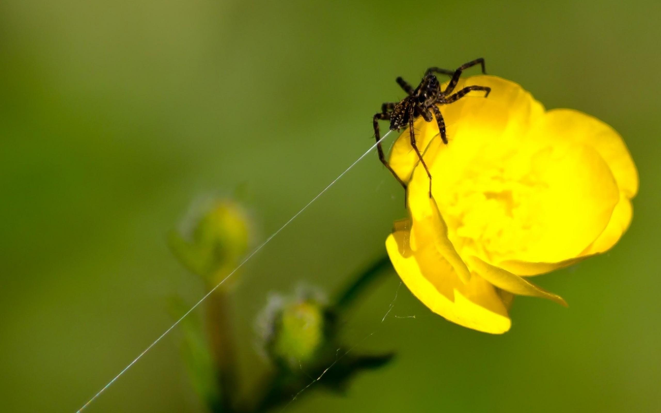 постоянные цветочный паук картинка браузер сделает поиск