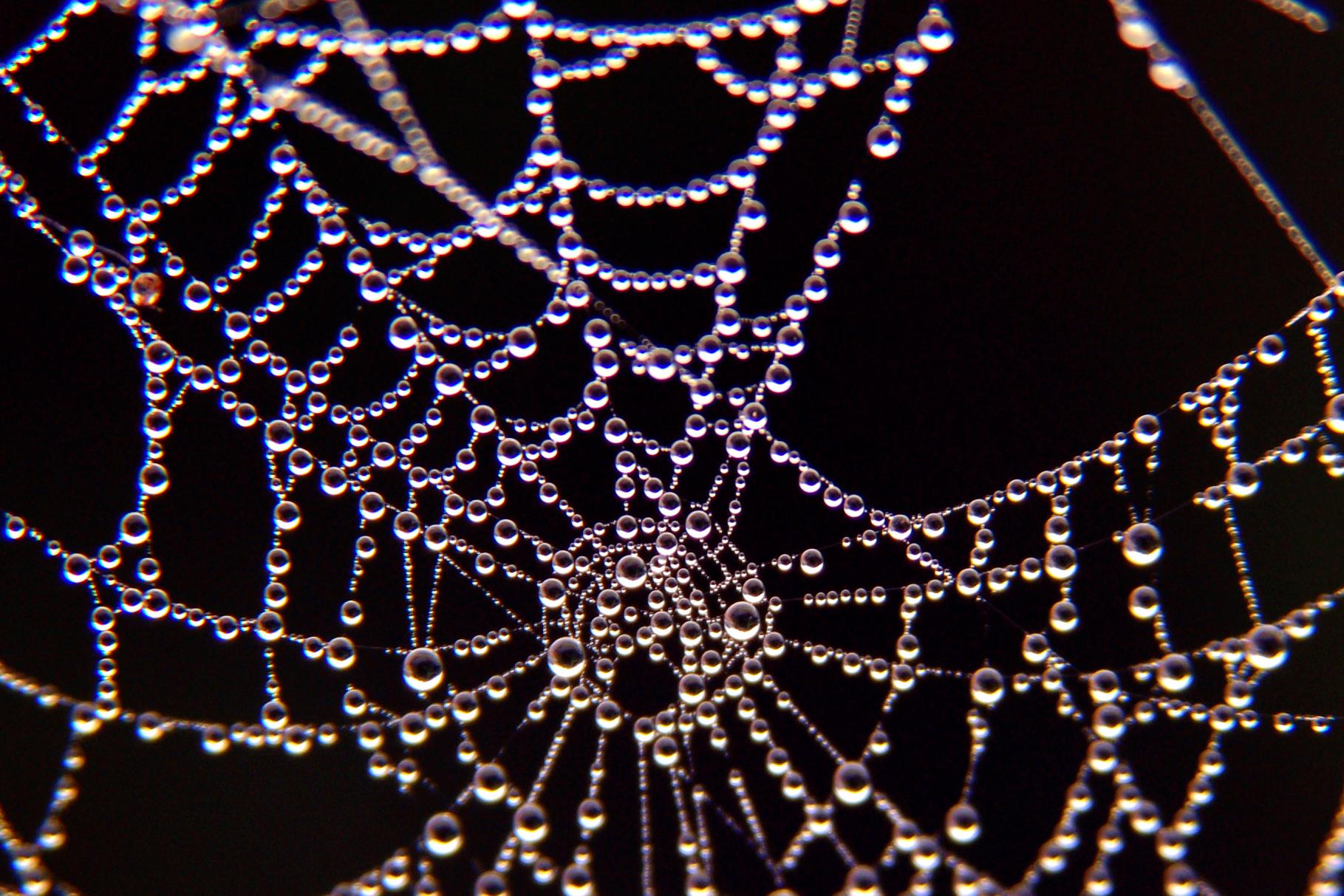 Spider Web Water Christmas Lights Pattern Moisture Branch Twig Symmetry