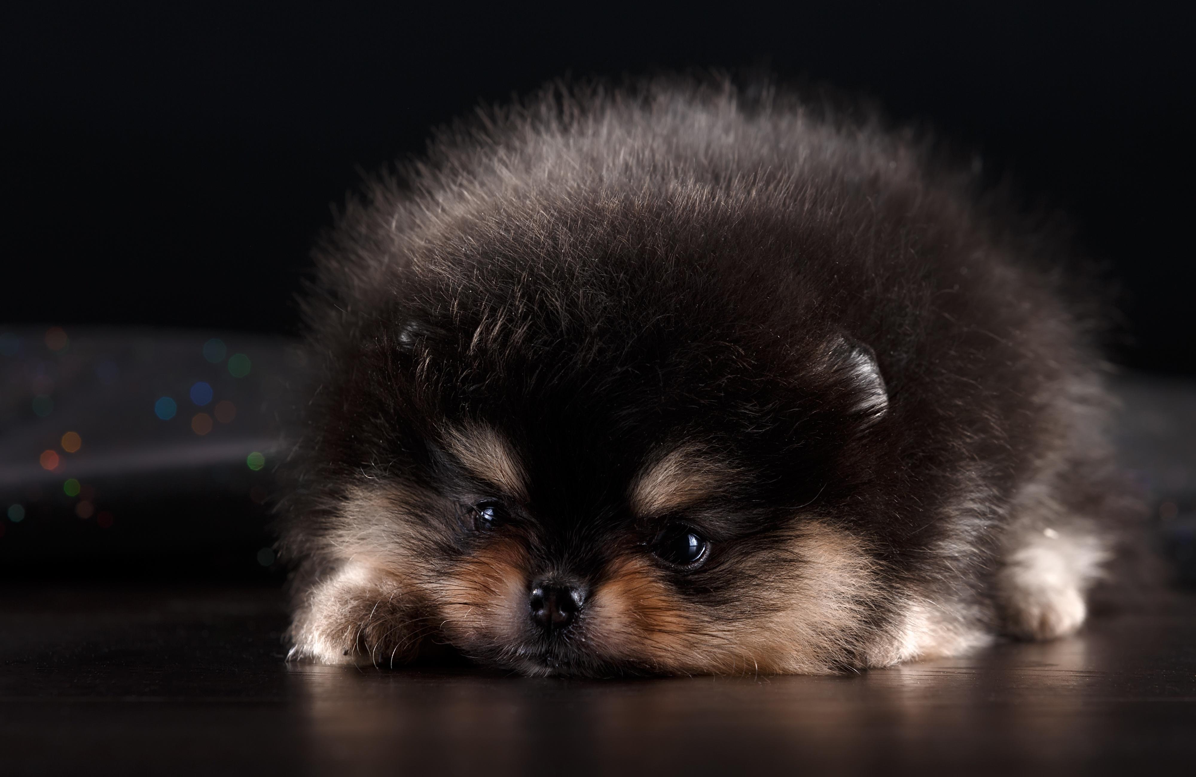 что многие пушистые щенки милые фото данный момент