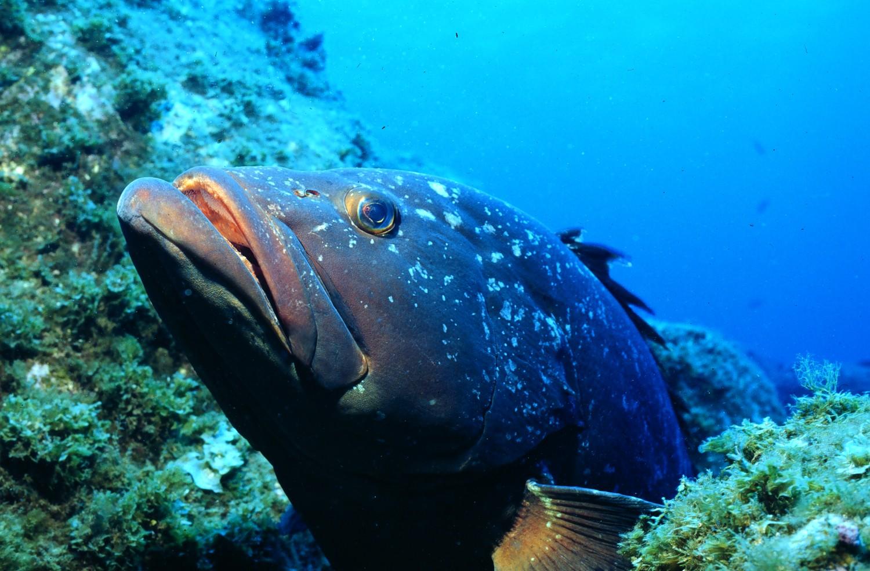 TROPICAL FISH - FISH SPECIES Uk sea fish species pictures