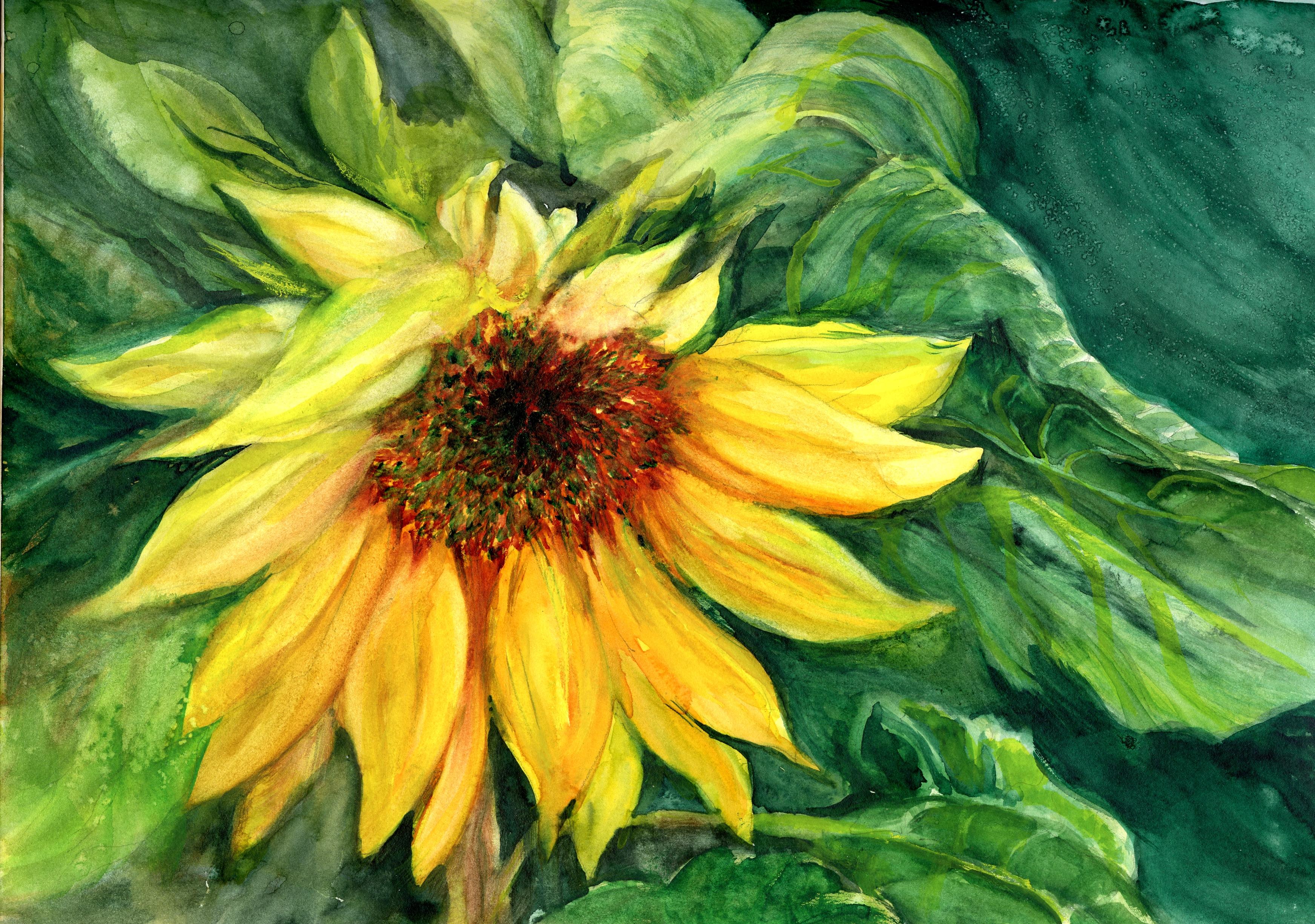 Stillmanandbirn Watercolor Sunflowers Flowers Nature Outdoors