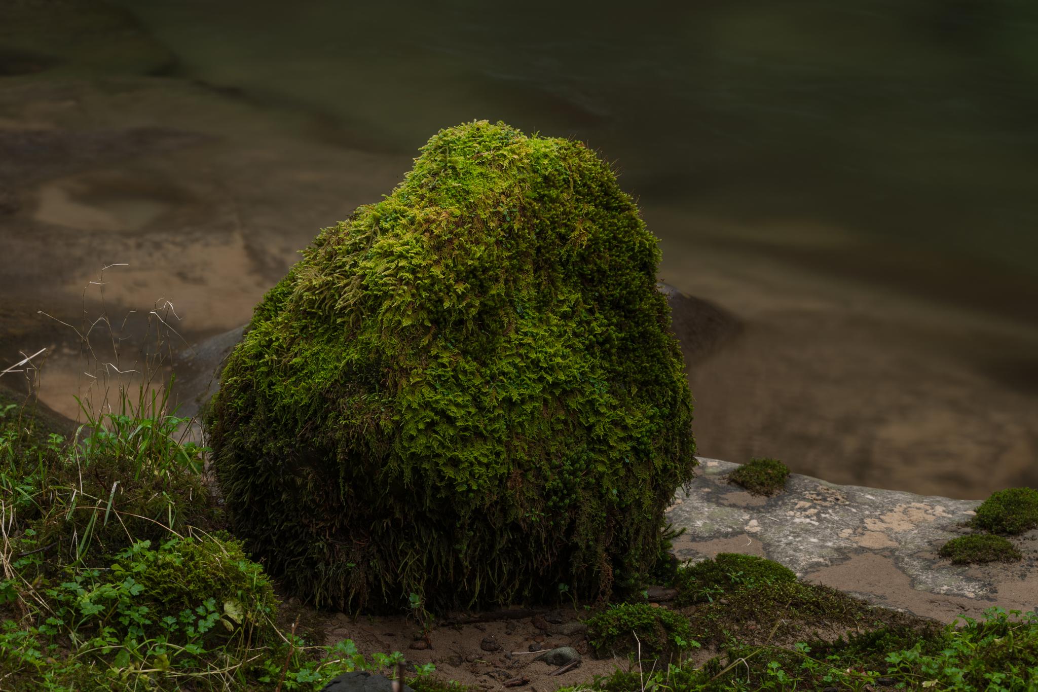 Wallpaper Stone River Moss Green Plants Nature Outdoor