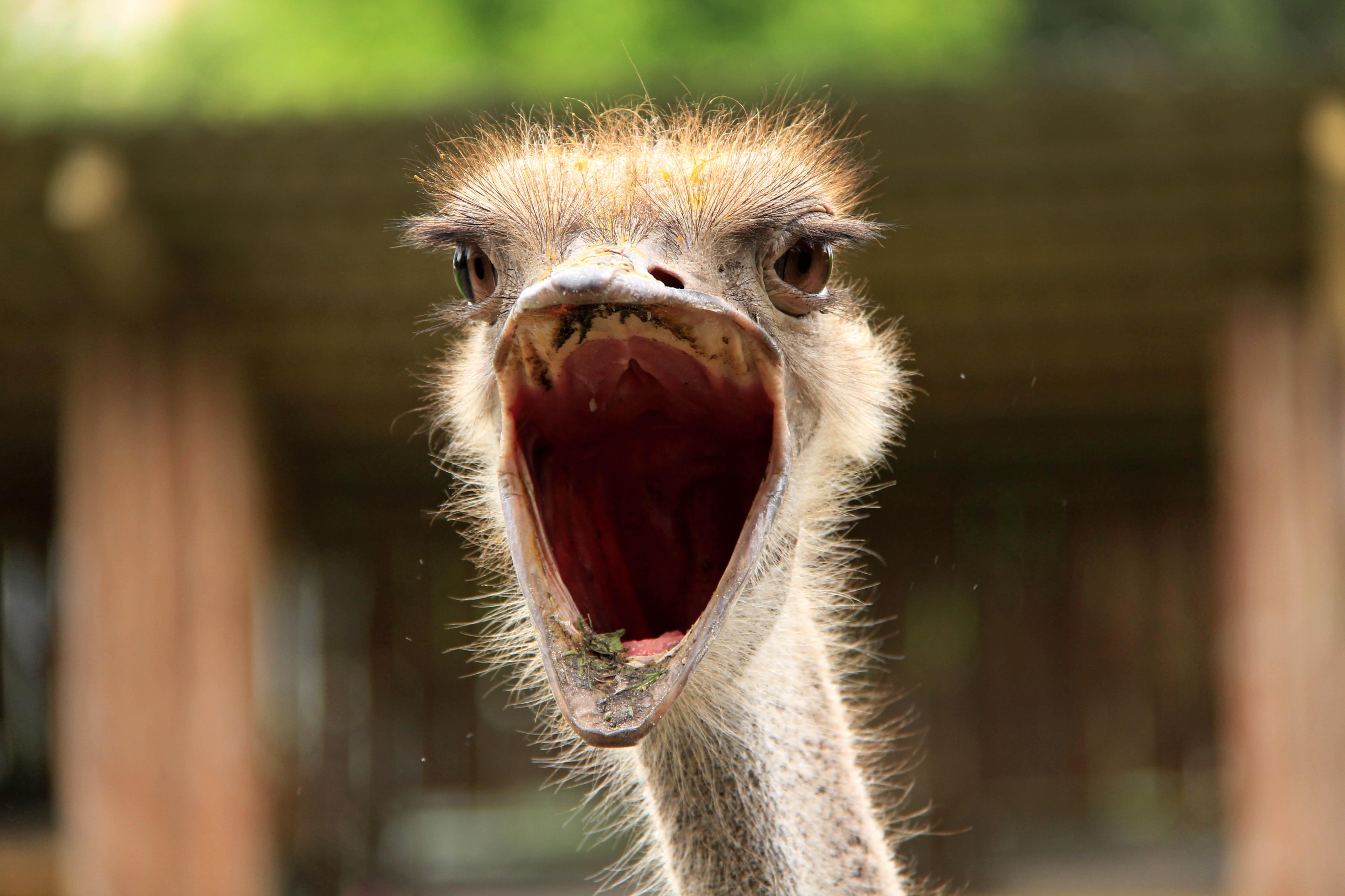 Картинка птенчика с открытым ртом