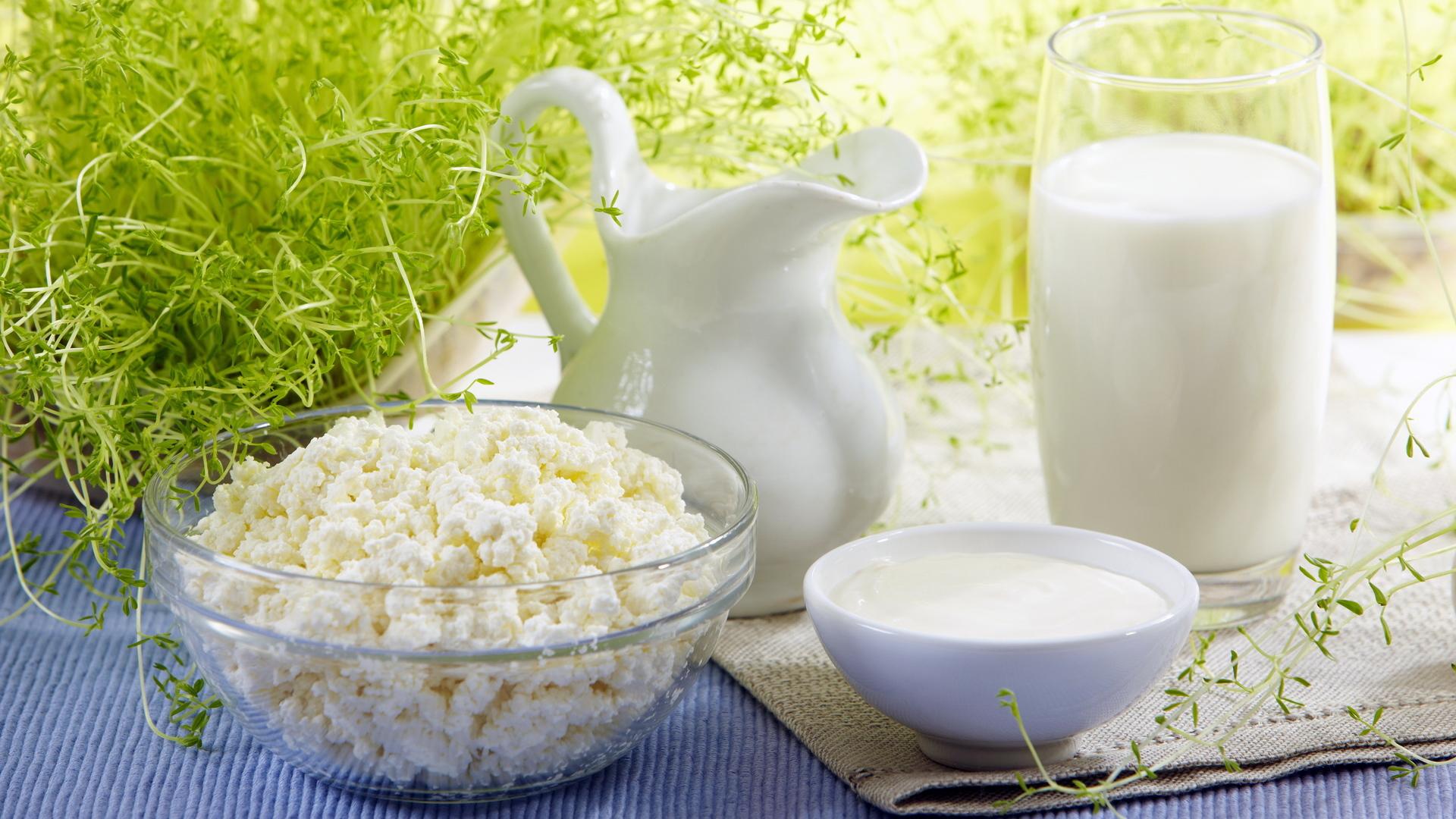 Реферат: Технология диетических кисломолочных продуктов