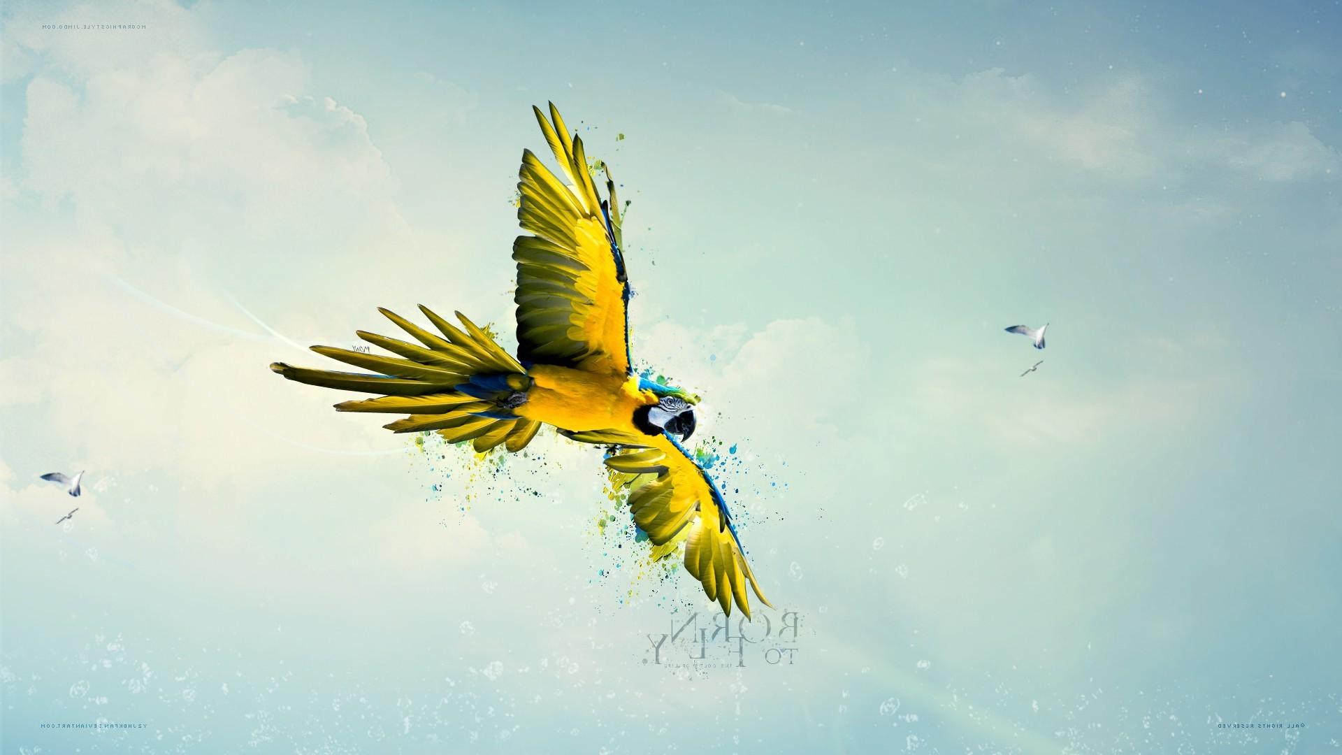 Papier Peint Avec Perroquet fond d'écran : lumière du soleil, des oiseaux, la nature