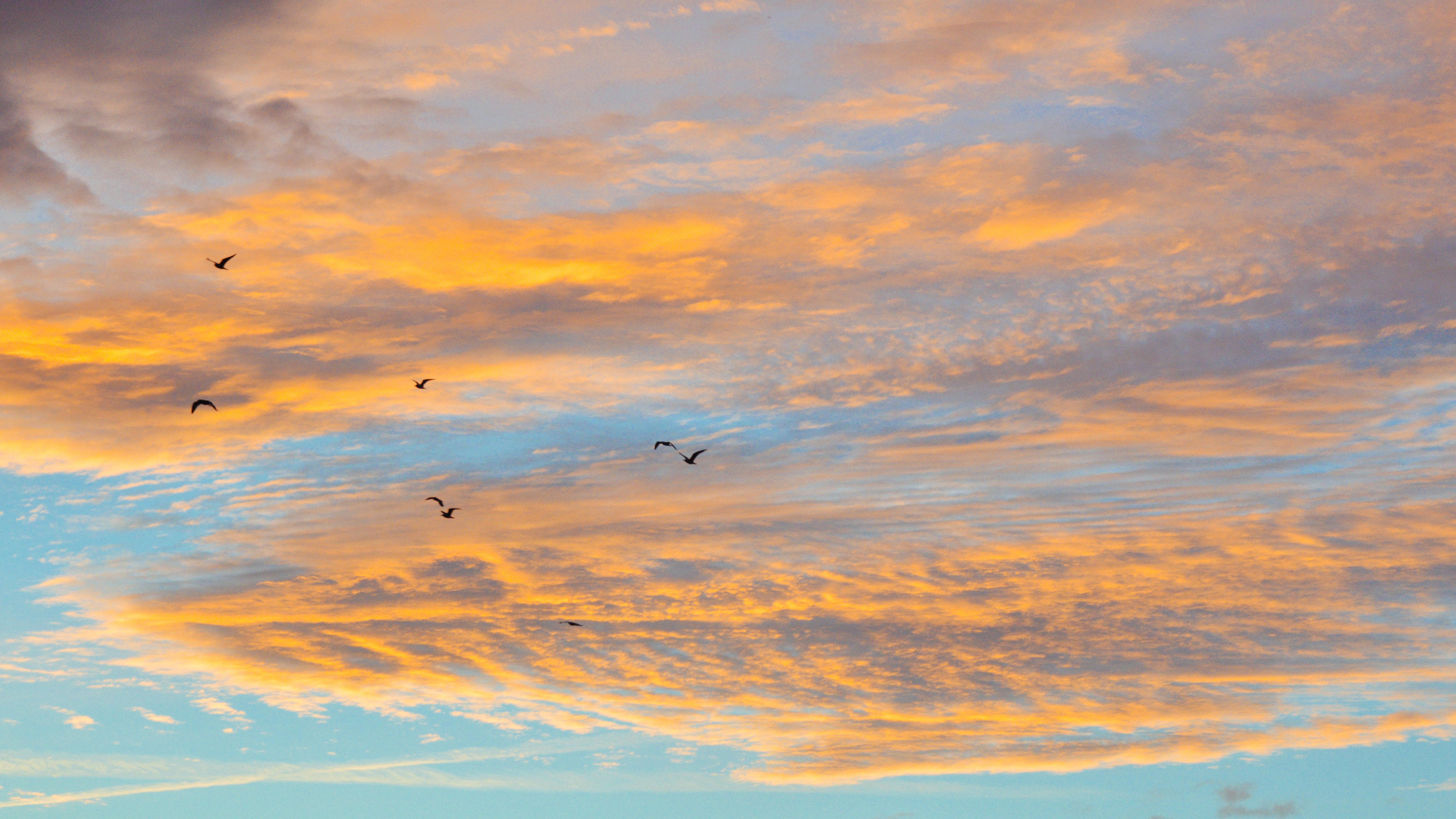 красивое фото облака птицы закат рассвет настоящее время живых