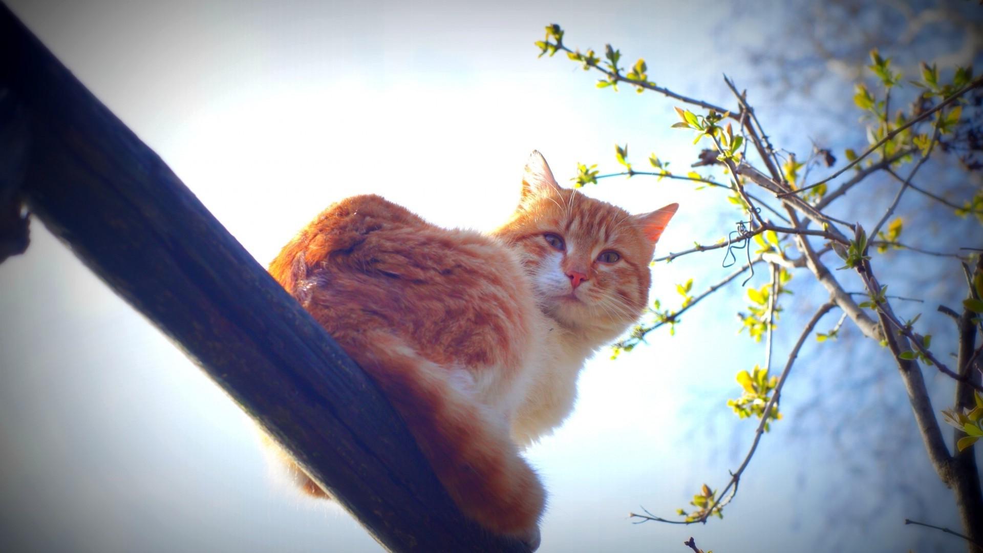 Fondos de pantalla : luz de sol, gato, Animales, azul, Mañana ...