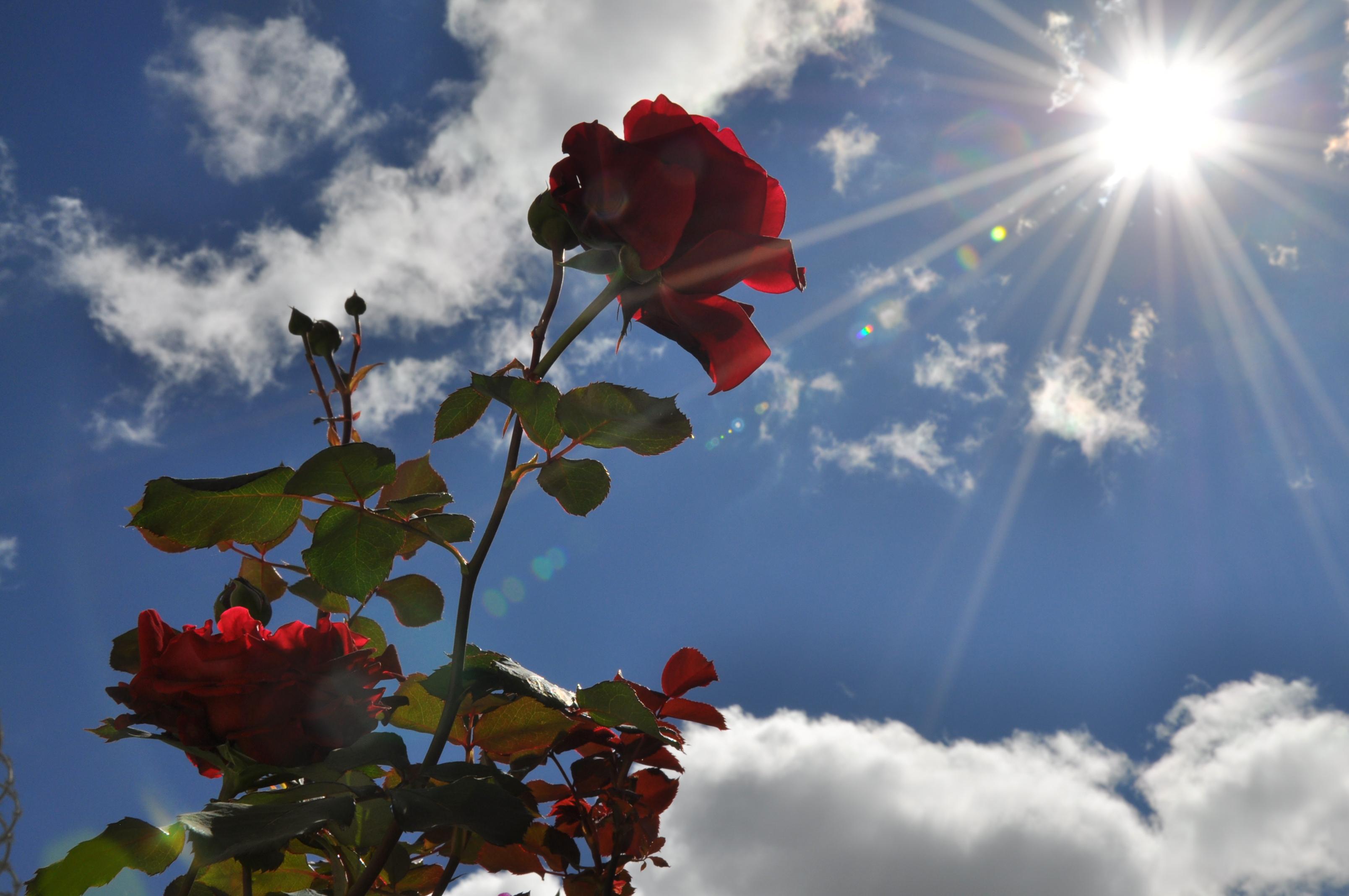 Wallpaper Sinar Matahari Kota Merah Langit Biru Sihir