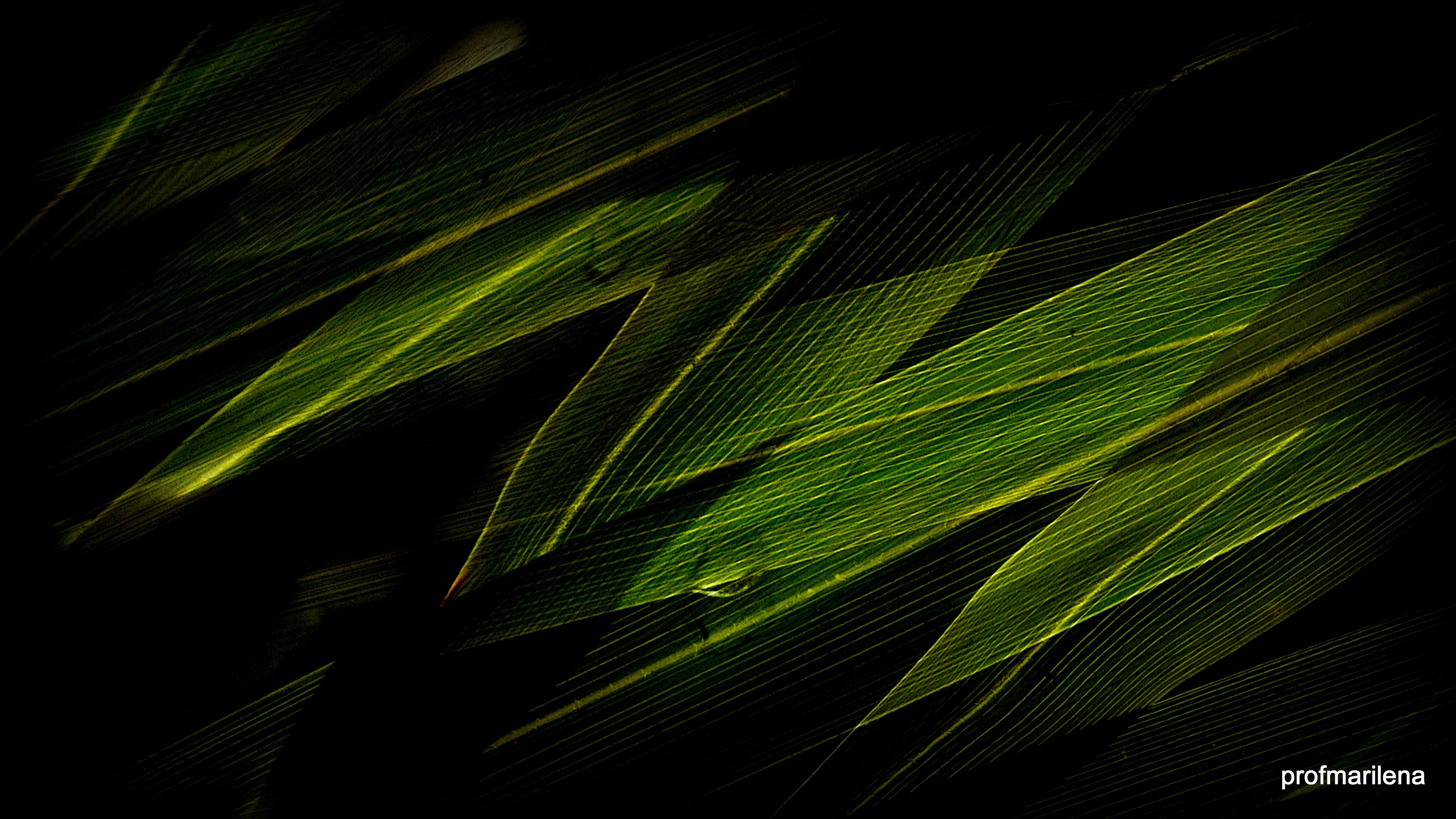 Download 620 Background Hitam Rumput Terbaik